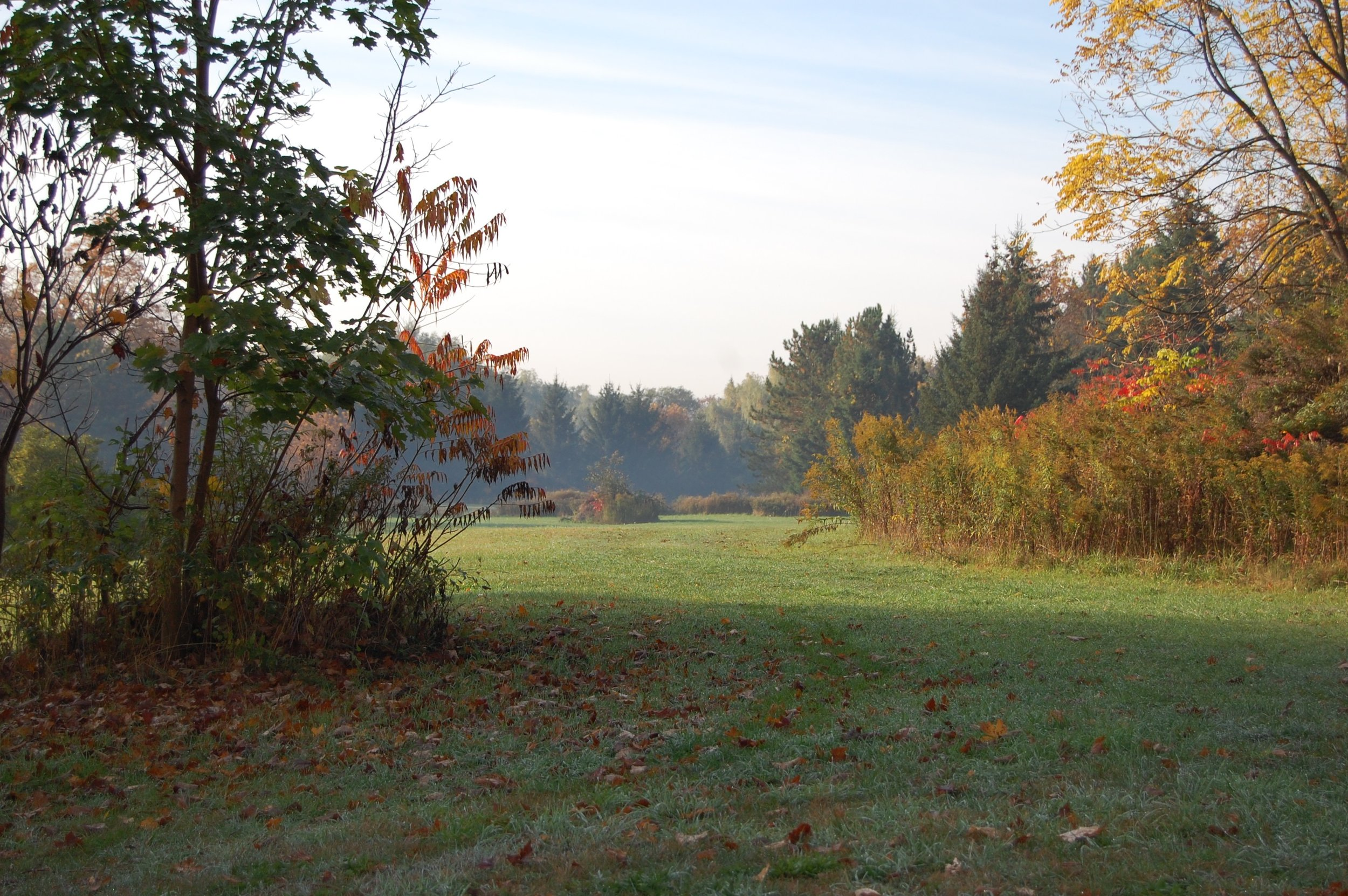 Parkland in Fall 2.jpg
