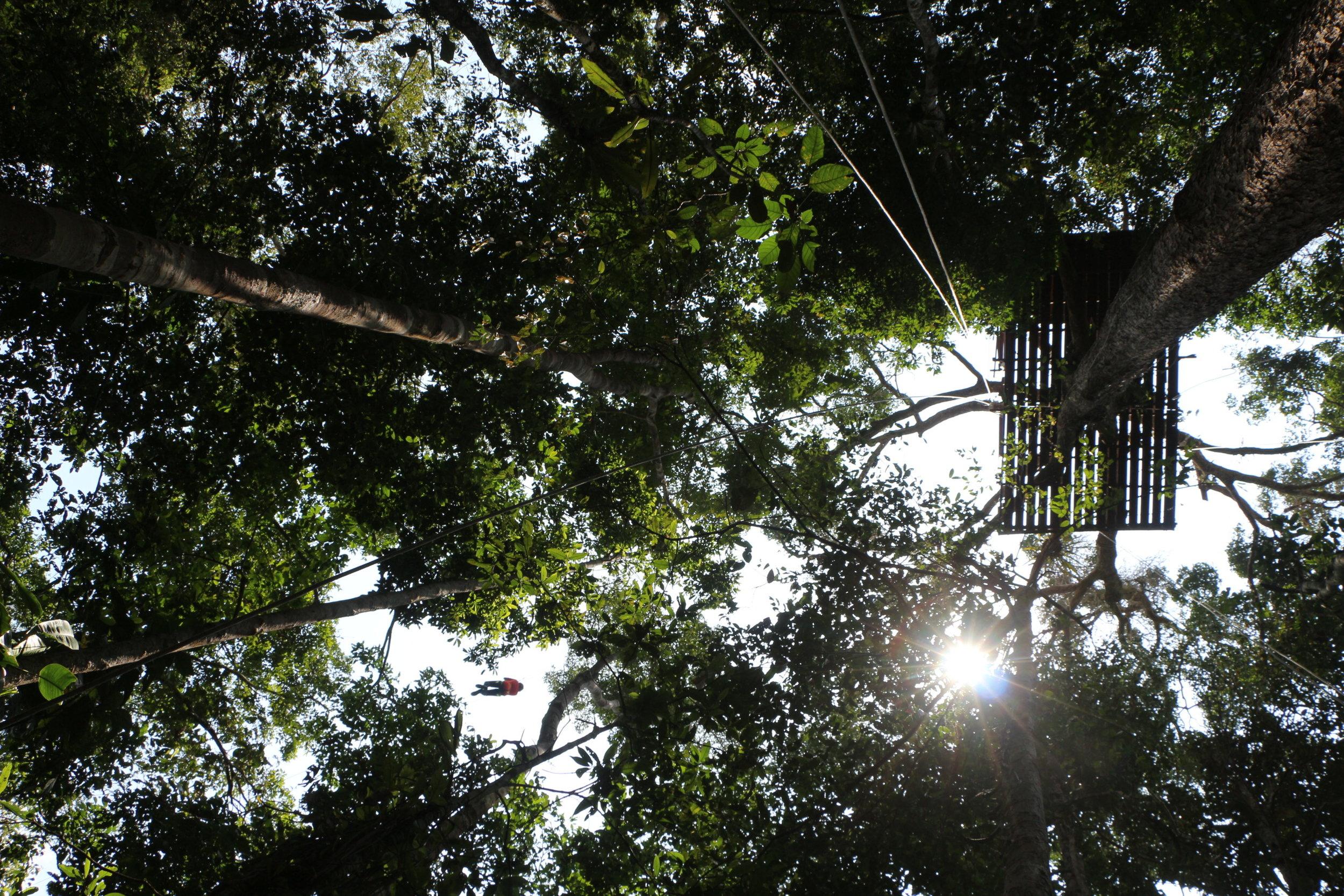 AMAZONAS -