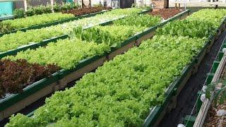 Greenhouse plant 3.jpg