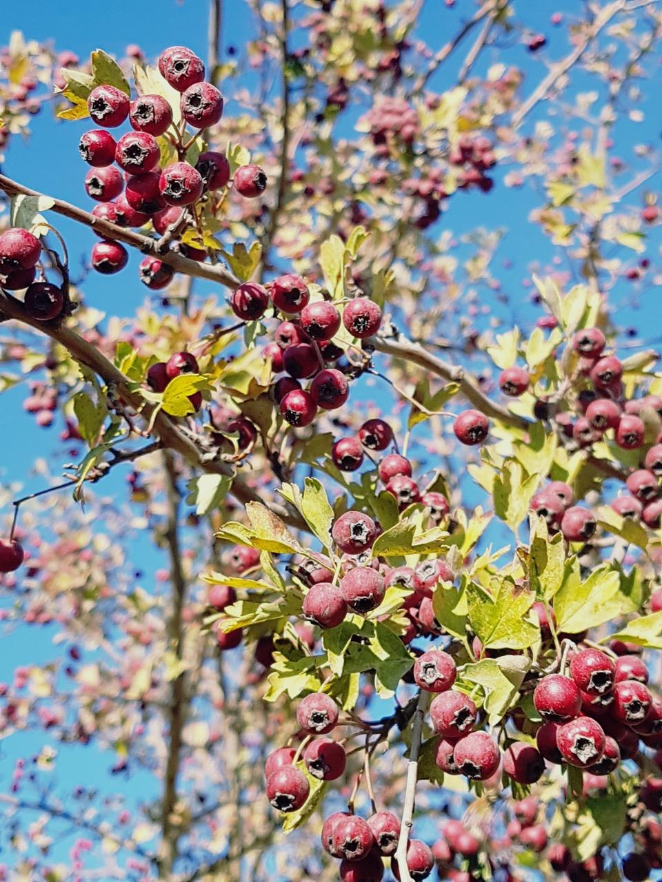 marseille-wild-berries