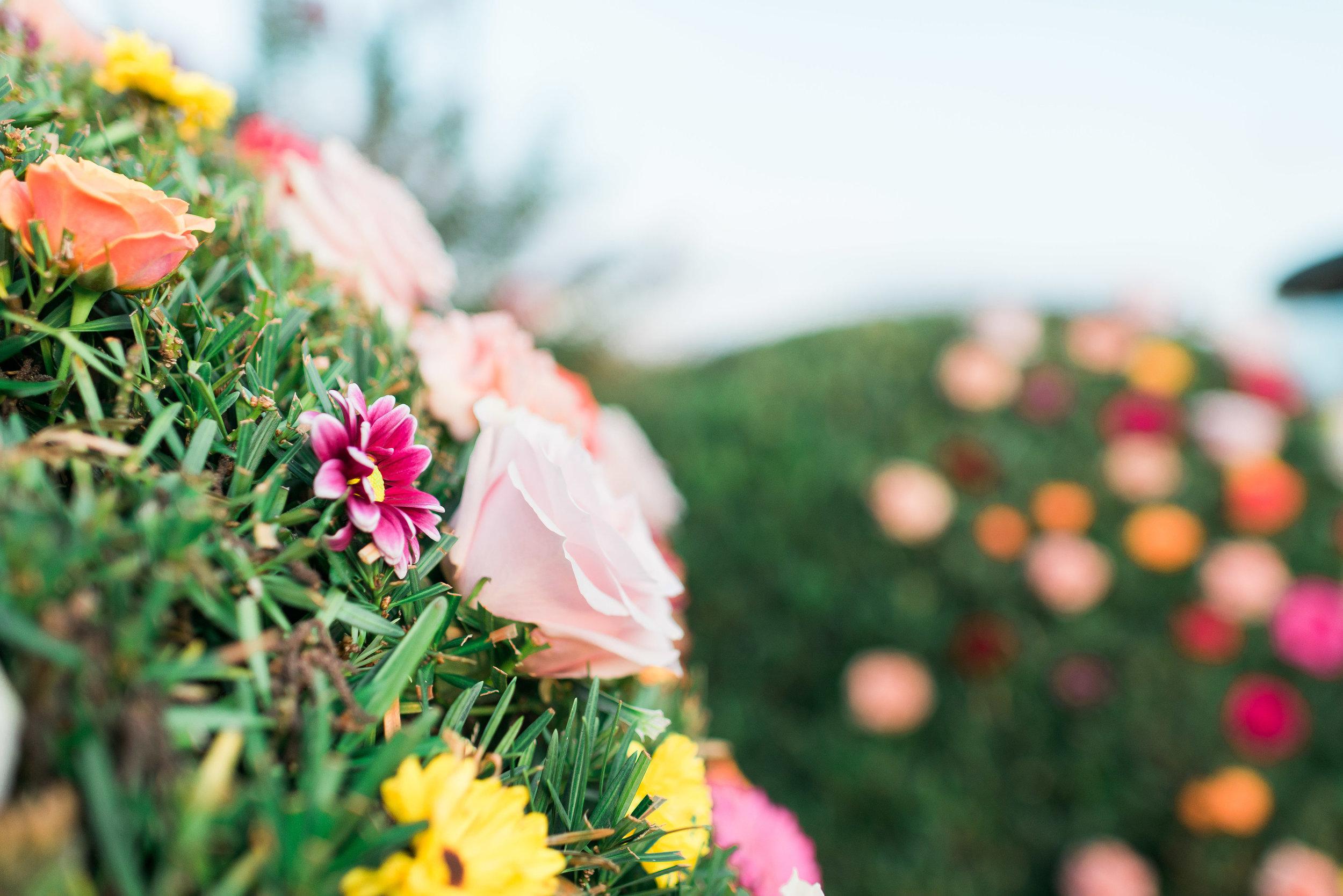 Flowerchildbushflowers(4of19).jpg