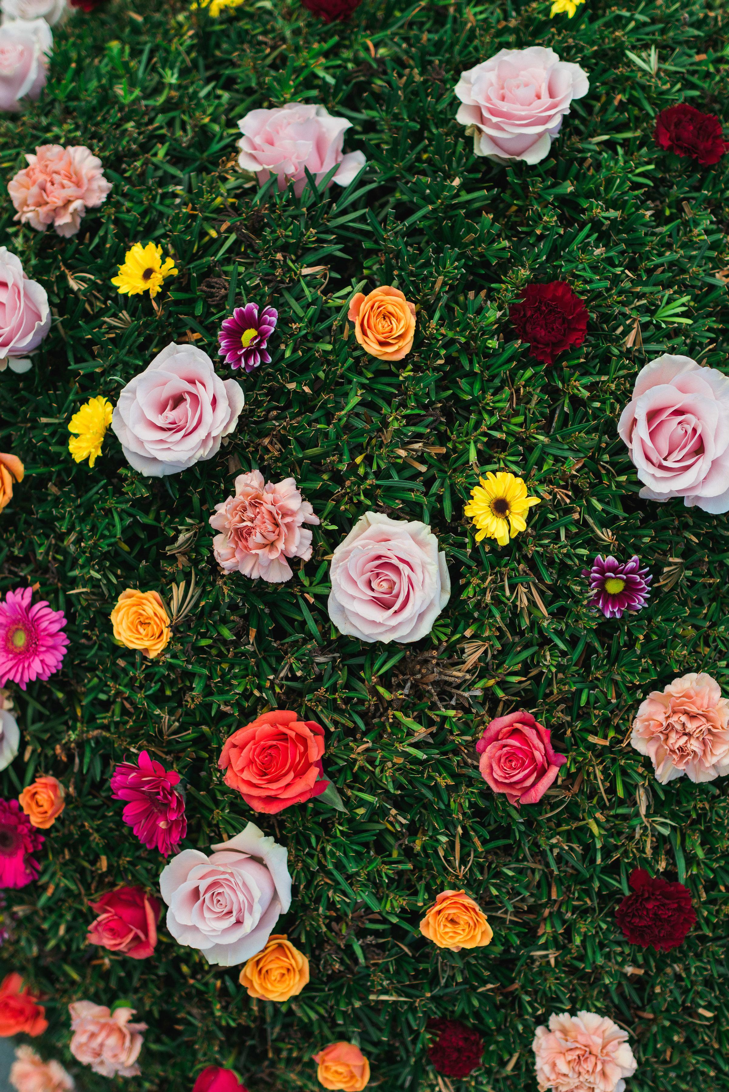 Flowerchildbushflowers(8of19).jpg