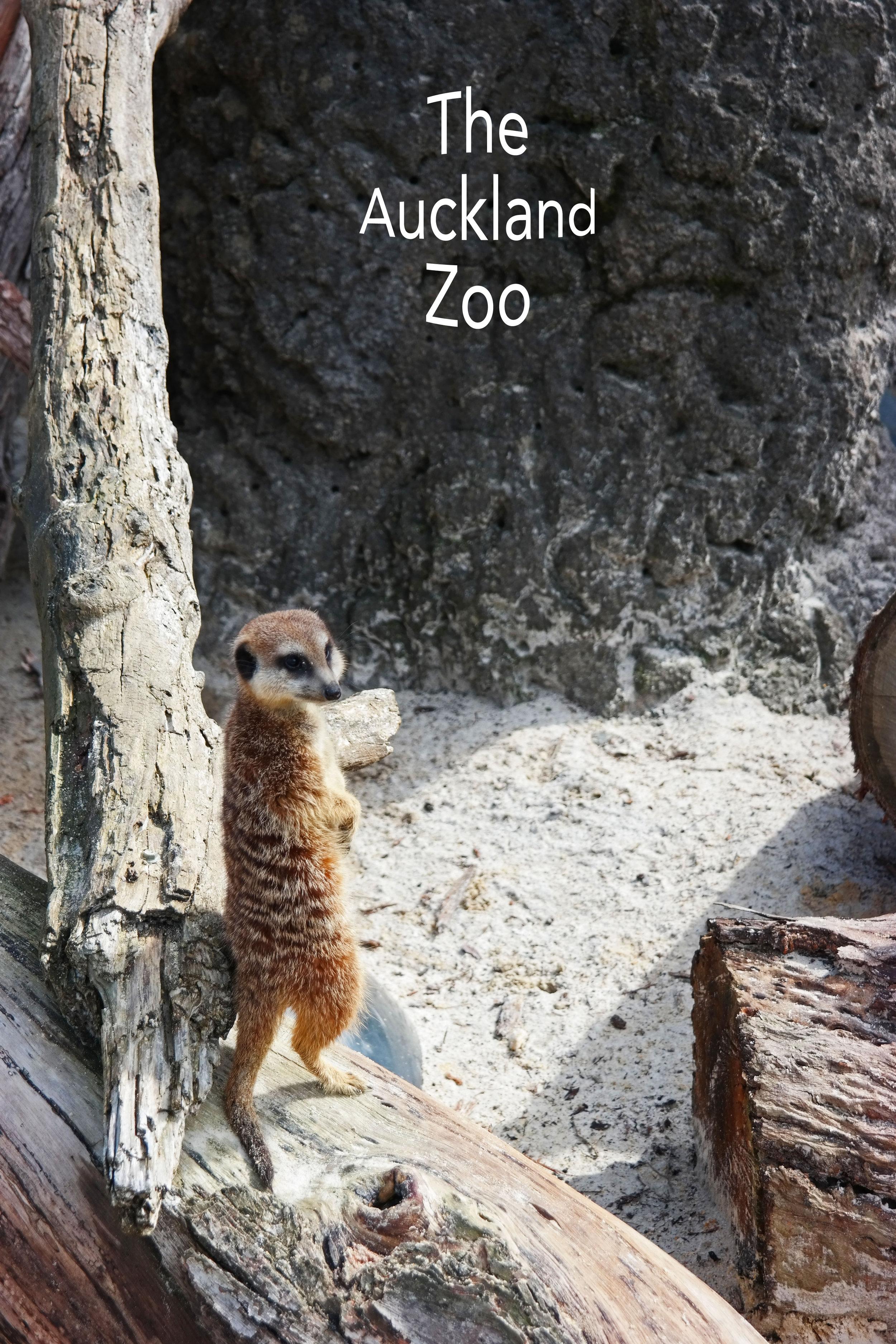 auckland-zoo-_4.jpg