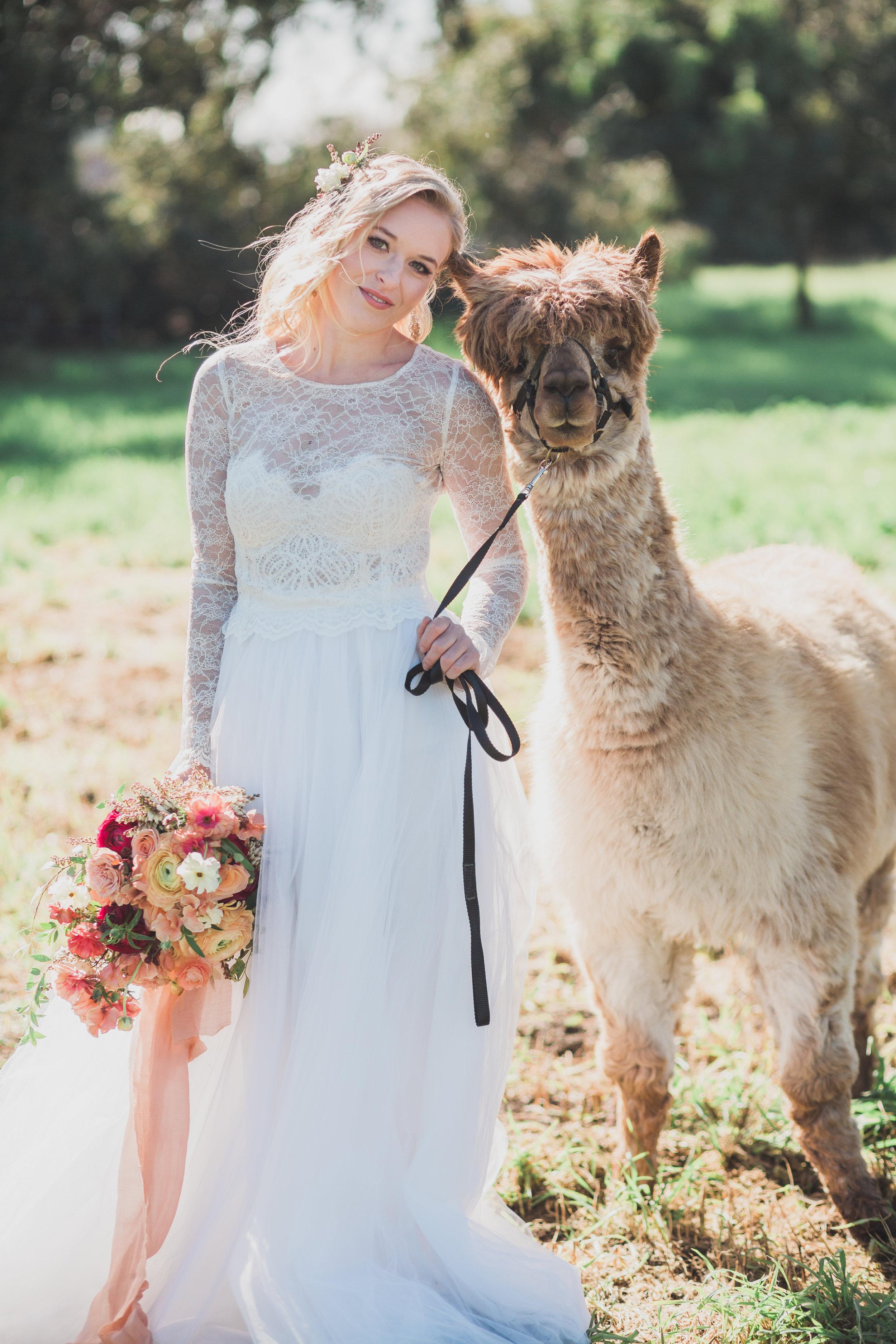 alpaca-styled-shoot-2017-151.jpg