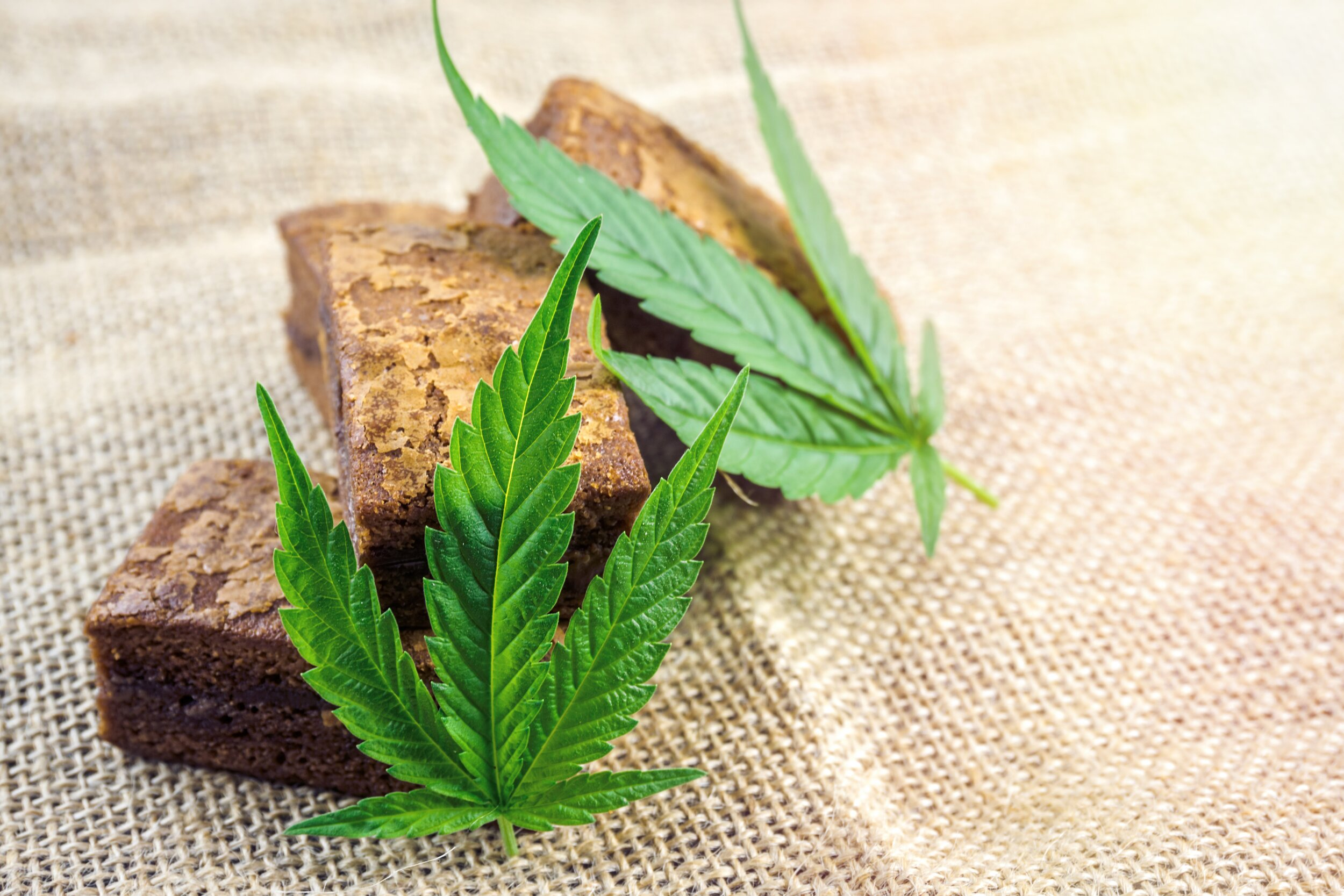 A cannabis edible, also known as a cannabis-infused food or simply an edible, is a food product that contains cannabinoids, especially tetrahydrocannabinol (THC).