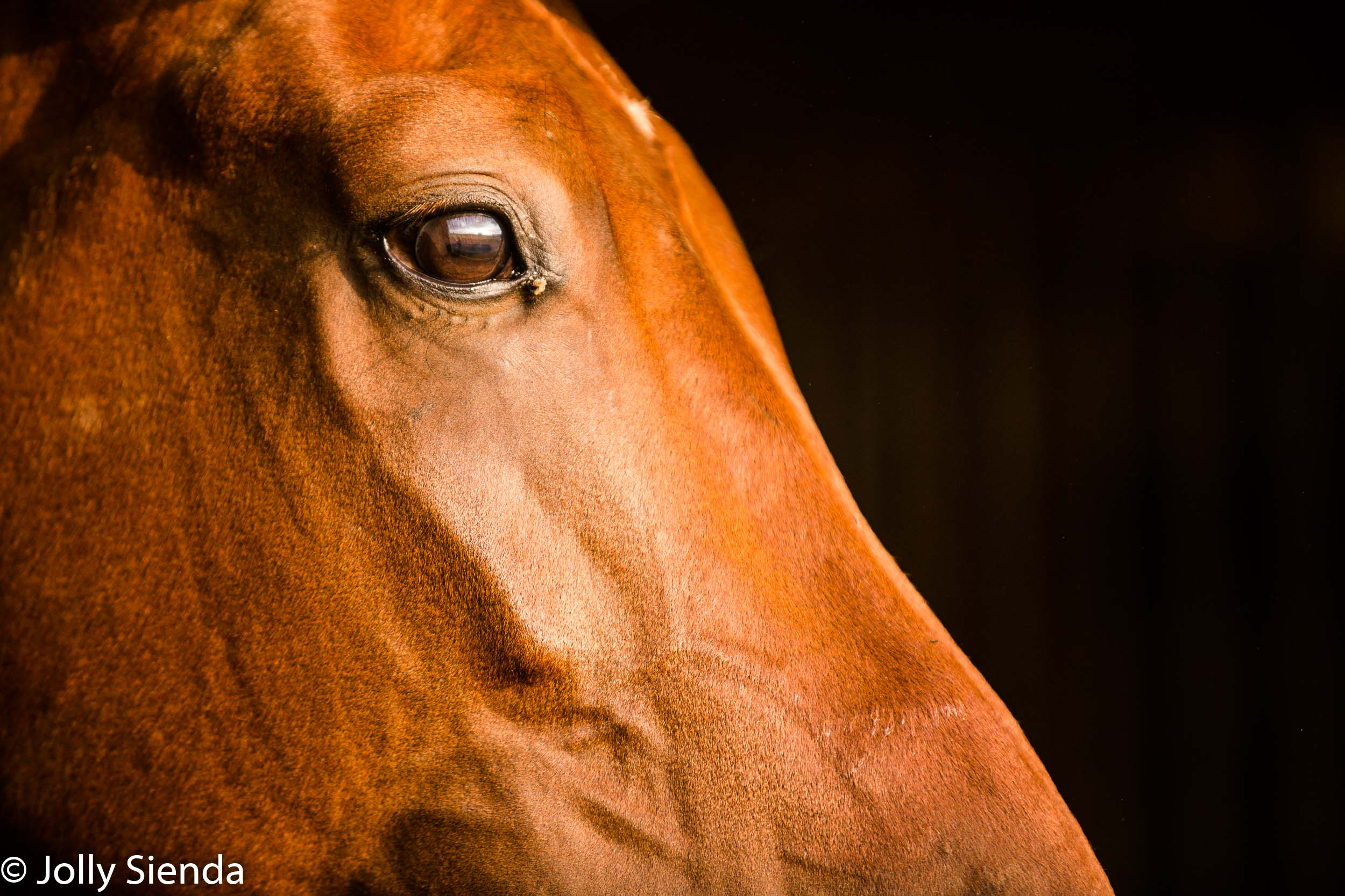 Equestrian Photography by Jolly Sienda Photography