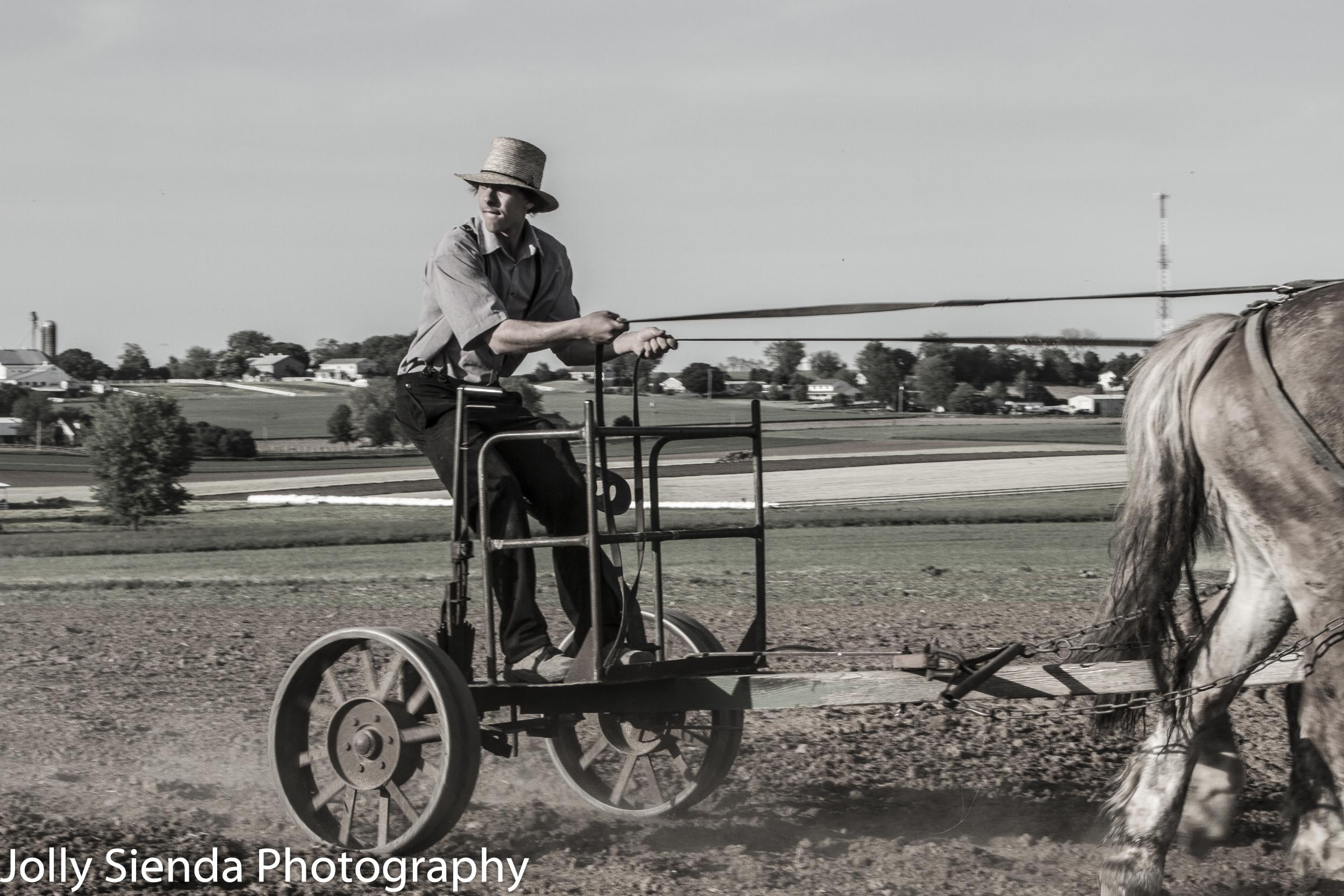 Portrait of a teenage Amish farmer with his horse and plow