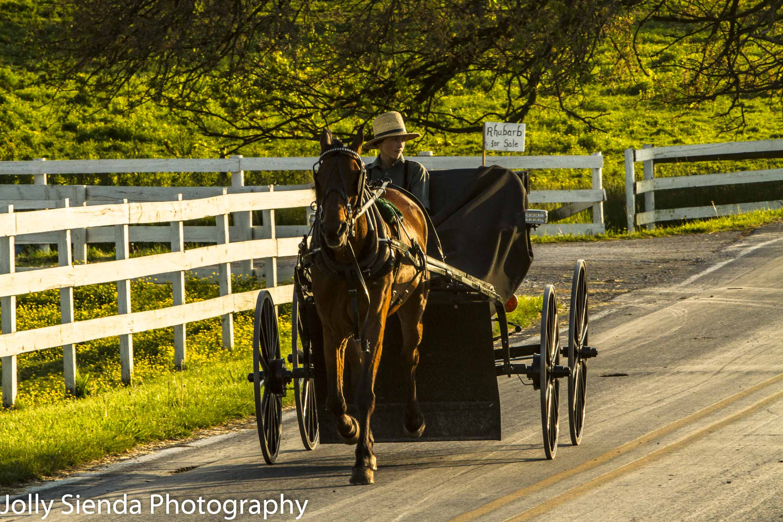 Amish teenager and his horse and buggy
