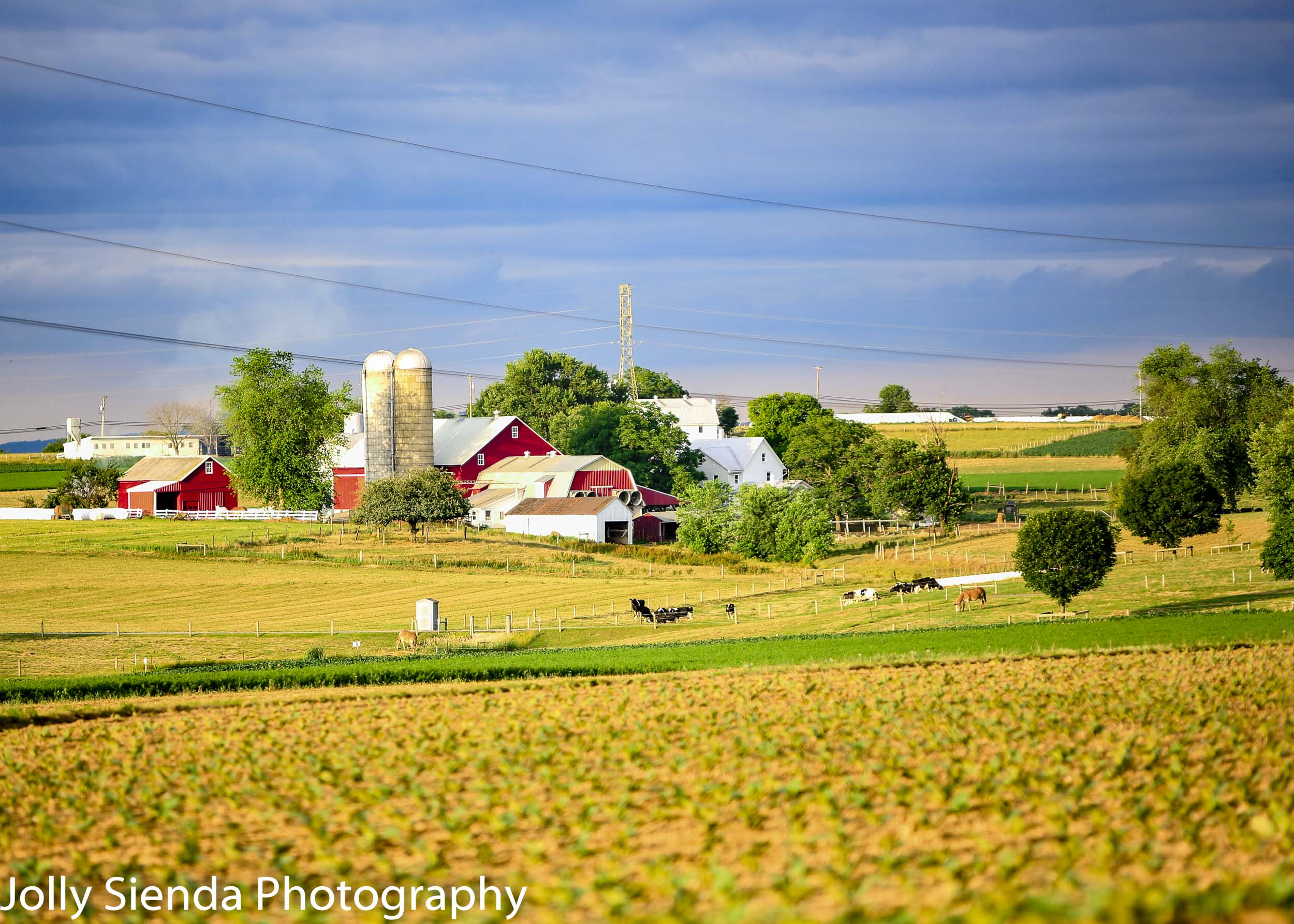 Red Barns, Silos, Cows, and Green Pastures on Amish Farmland