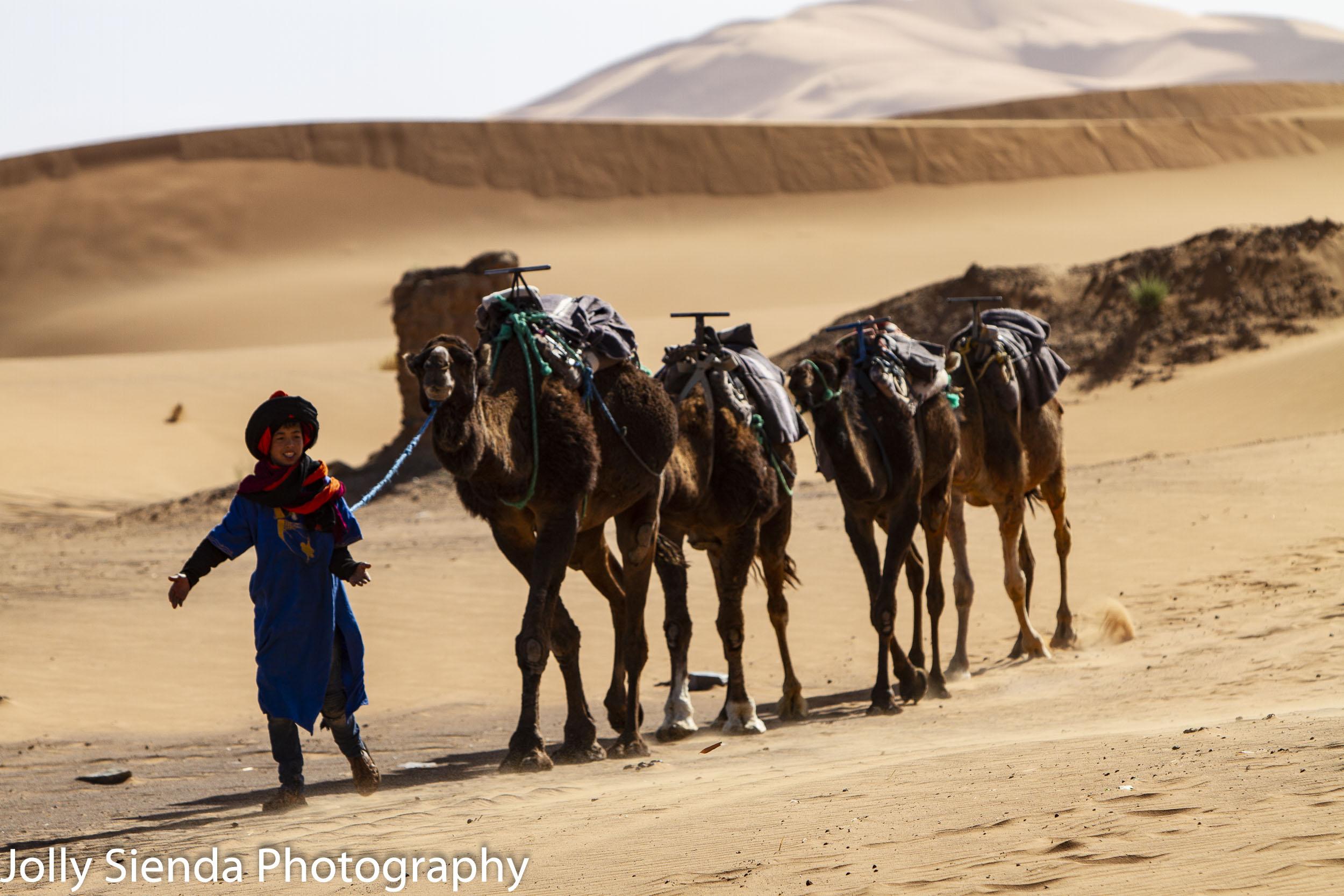 Camel herder leads his camel trek