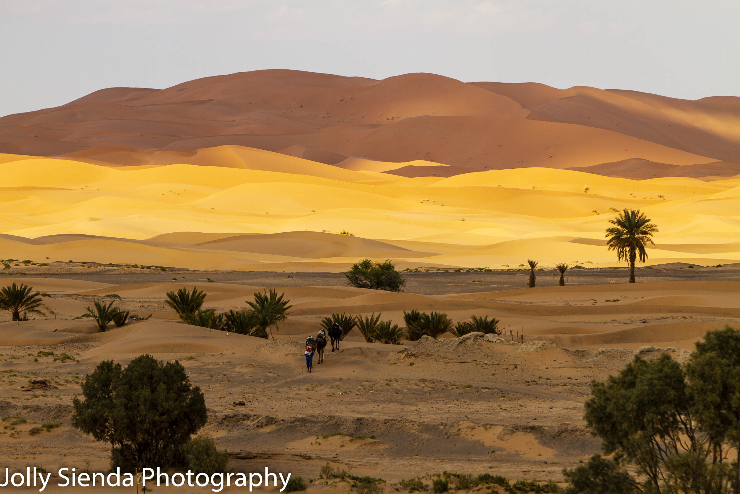 Camel trek at the dunes of the Sahara Desert