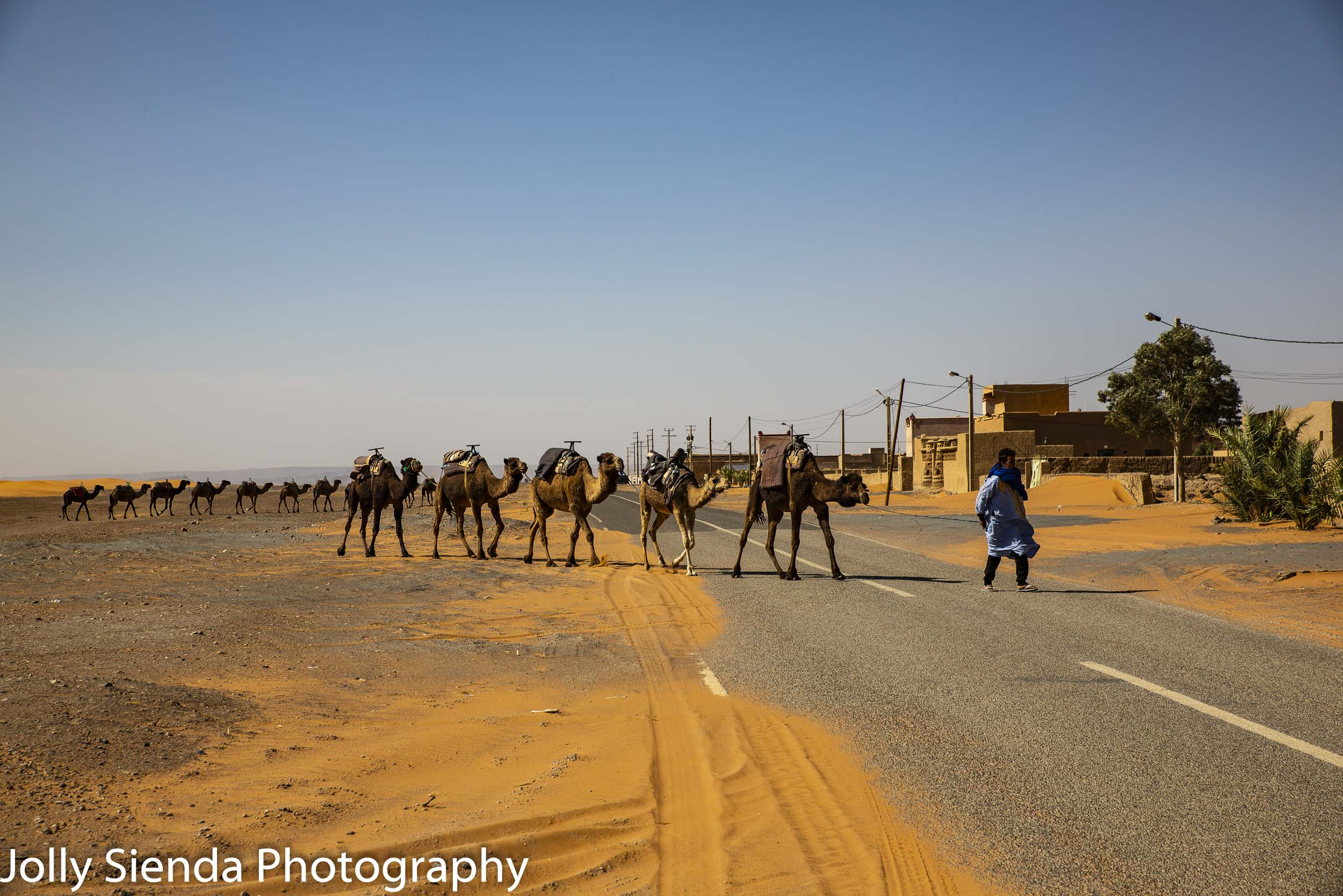 Camel herder with his camels crossing the street