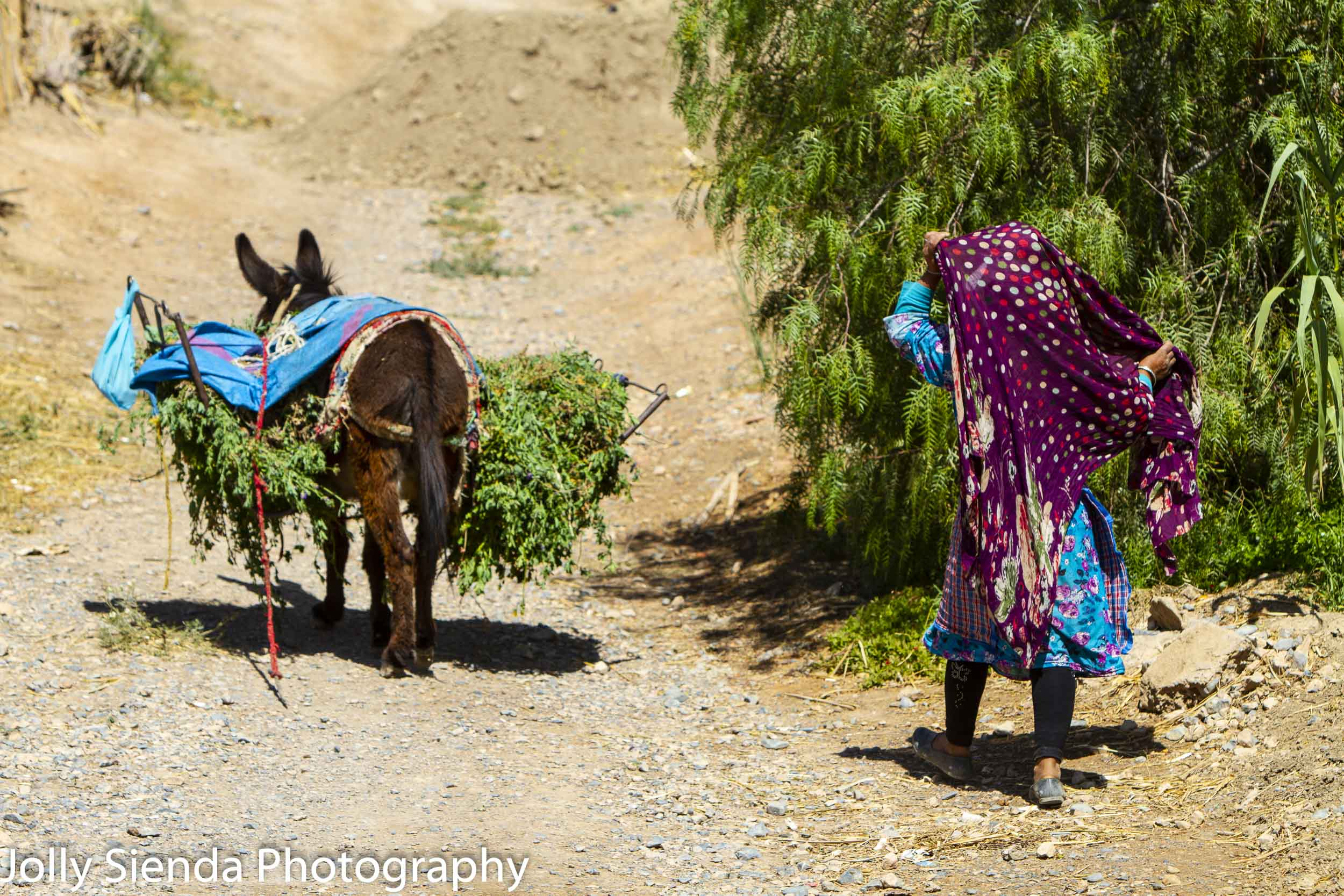 Berber girl follows the donkey