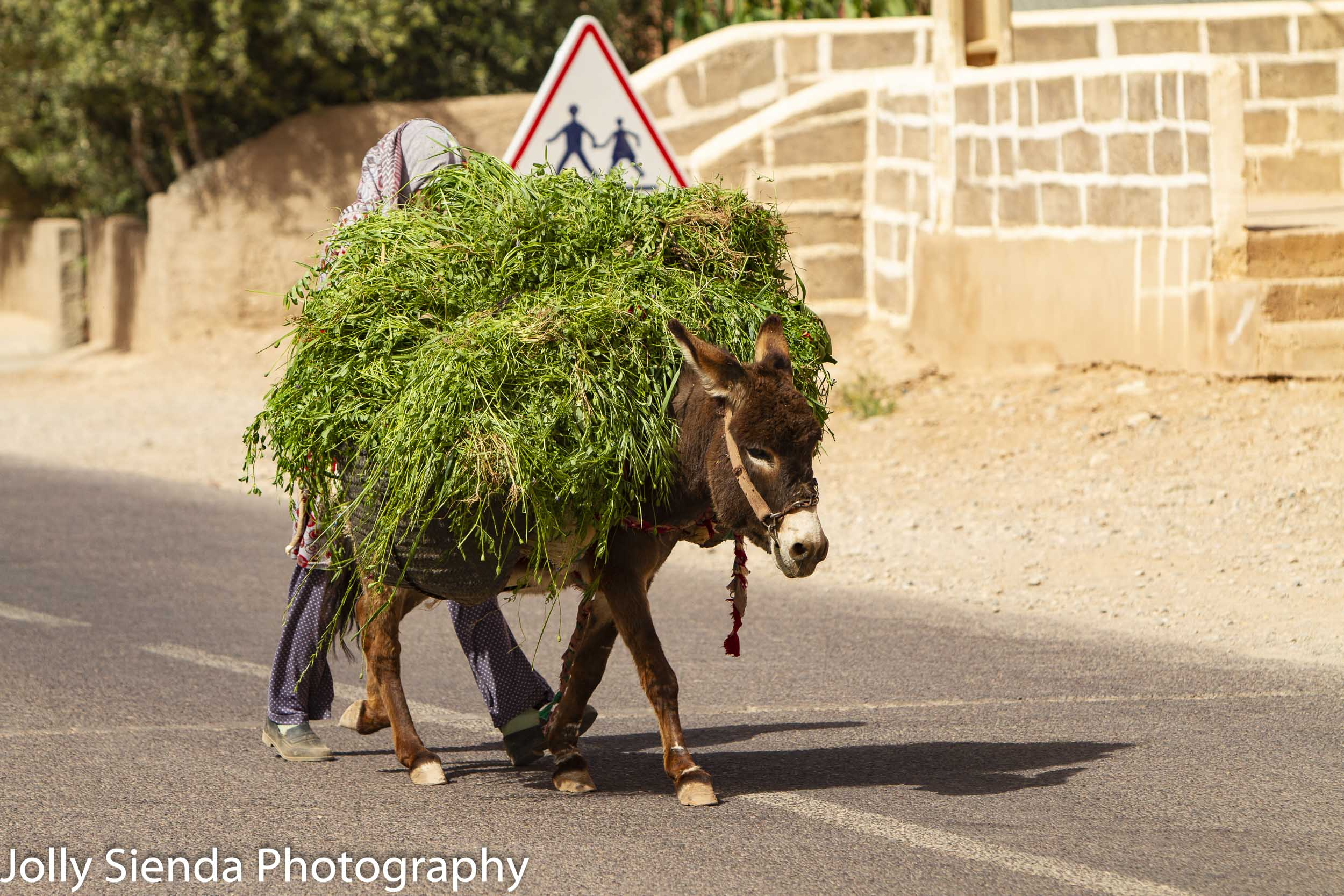 Donkey carries grasses led by a shy girl