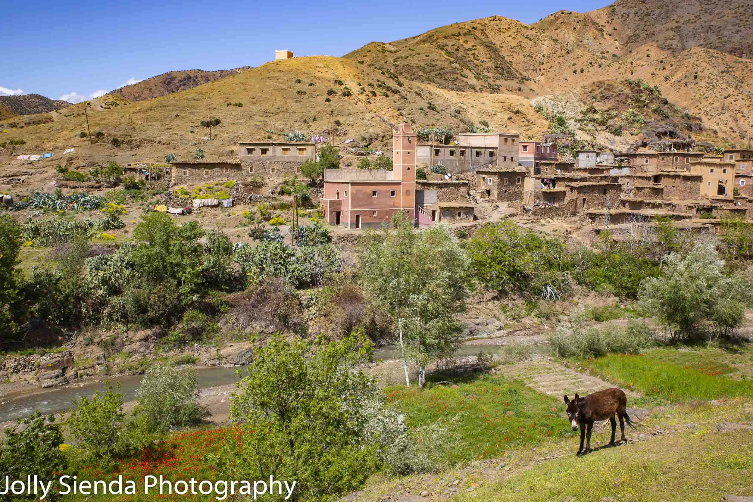 High Atlas Mountain village and a donkey