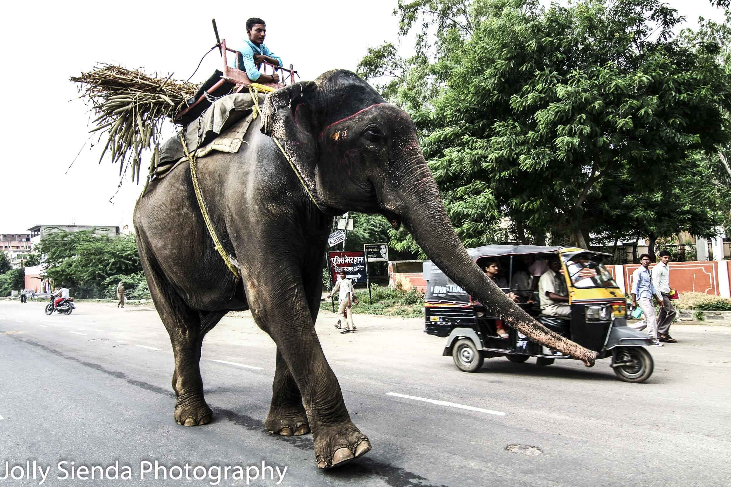 Man rides elephant along side a Tuk Tuk