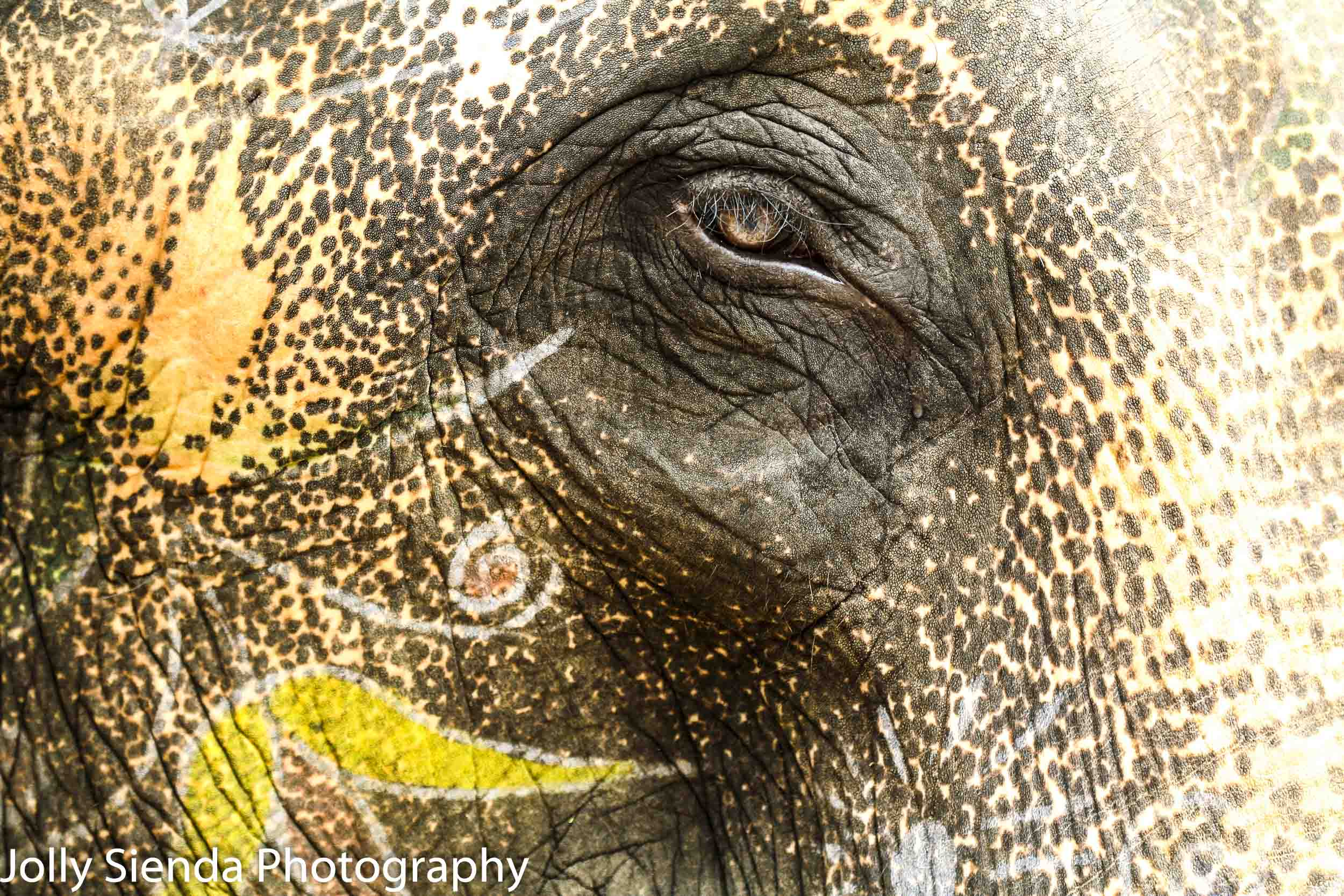 Painted Elephant and one eye at Amber Fort