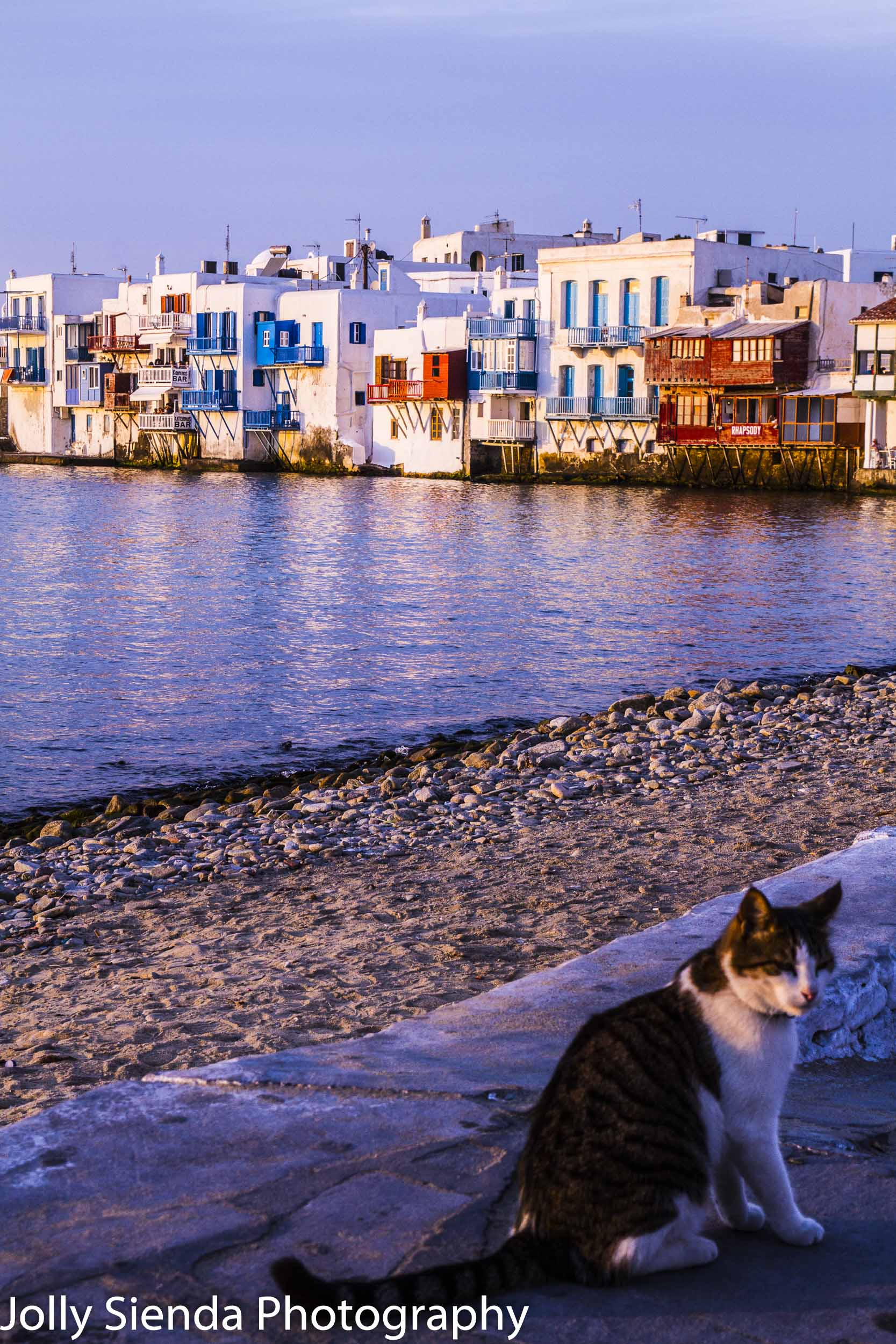 A Tuxedo Cat Pauses at Sunset with the town of Mykonos, Greece i