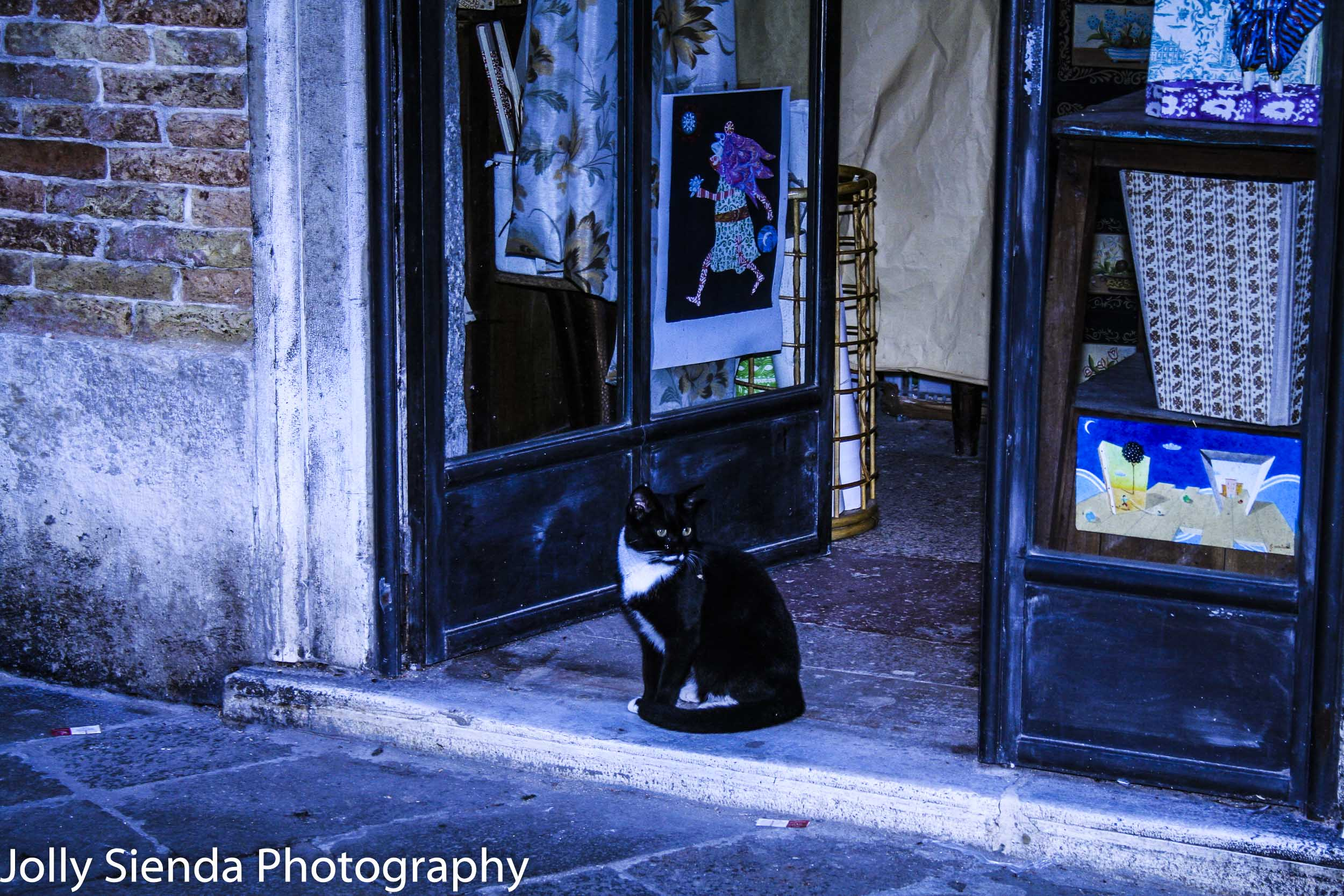 Venetian Black Tuxedo Shop Cat Takes in the View from the Open D