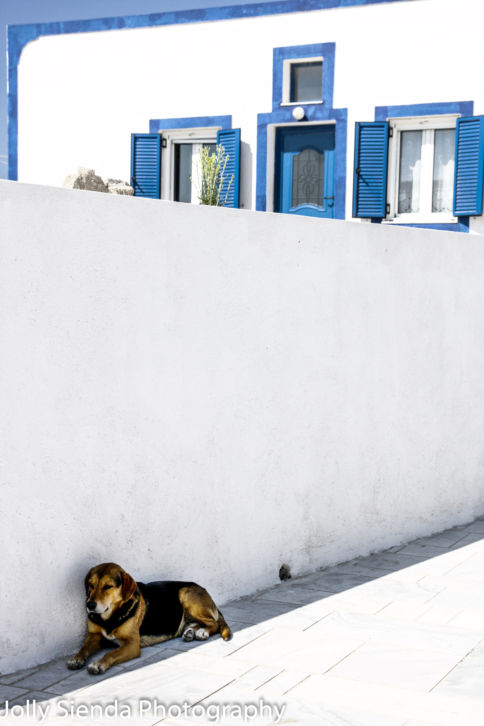 Beagle dog sits in the shade with a white washed building with b