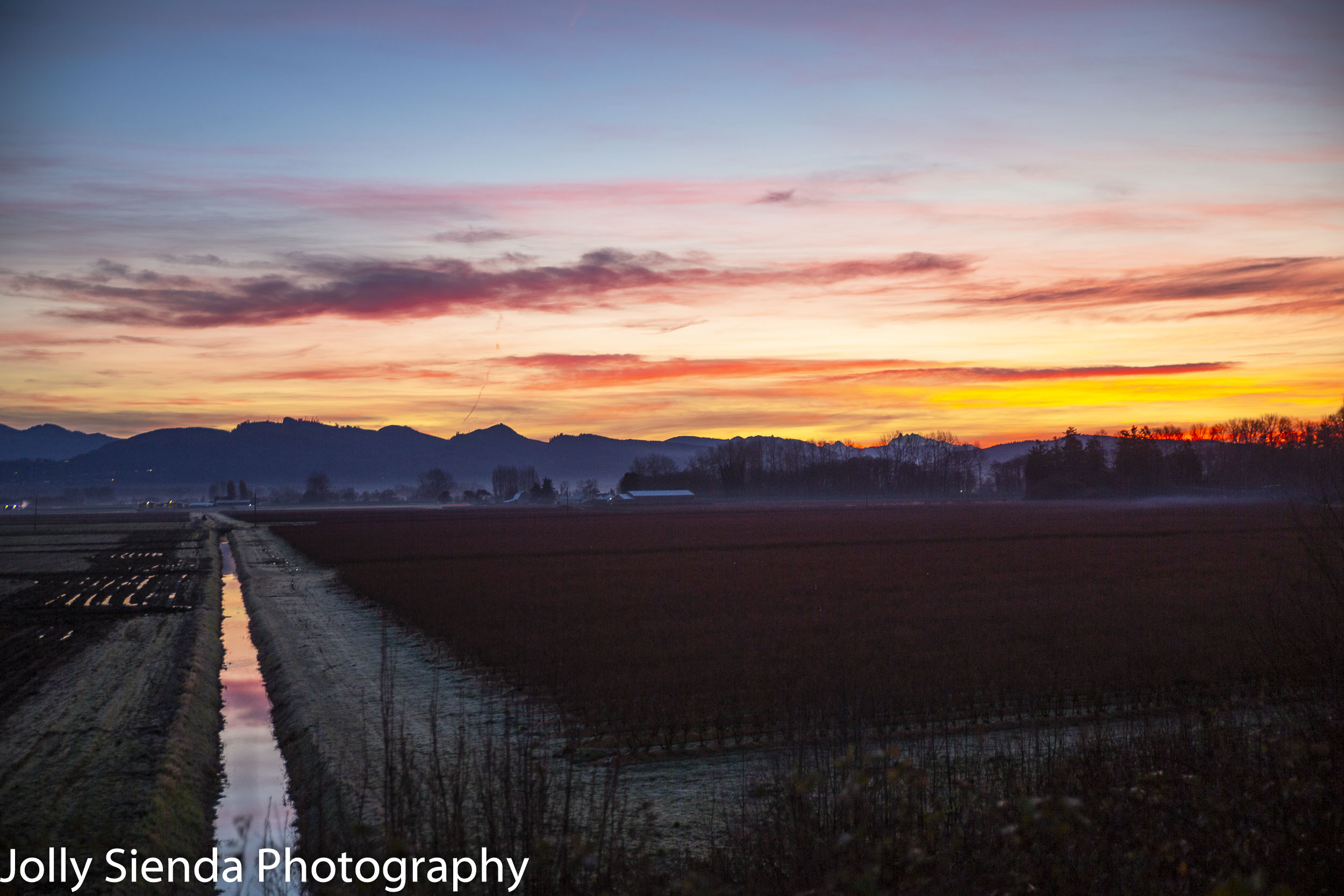 8:29 am, January 12, 2019, Winter sunrise over a blueberry field at the Skagit Valley