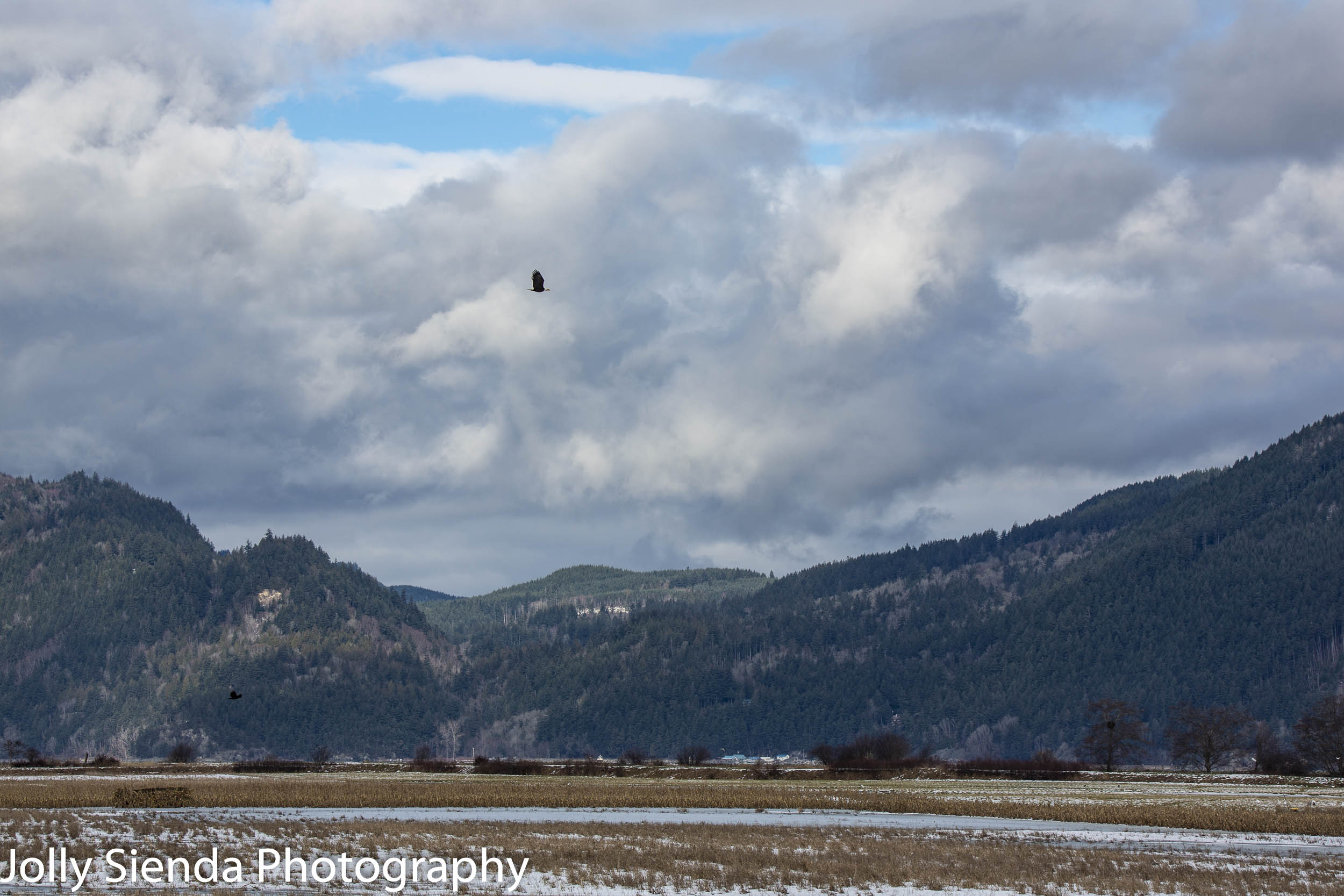 Skagit Valley, Bald Eagles flying around, and foothills