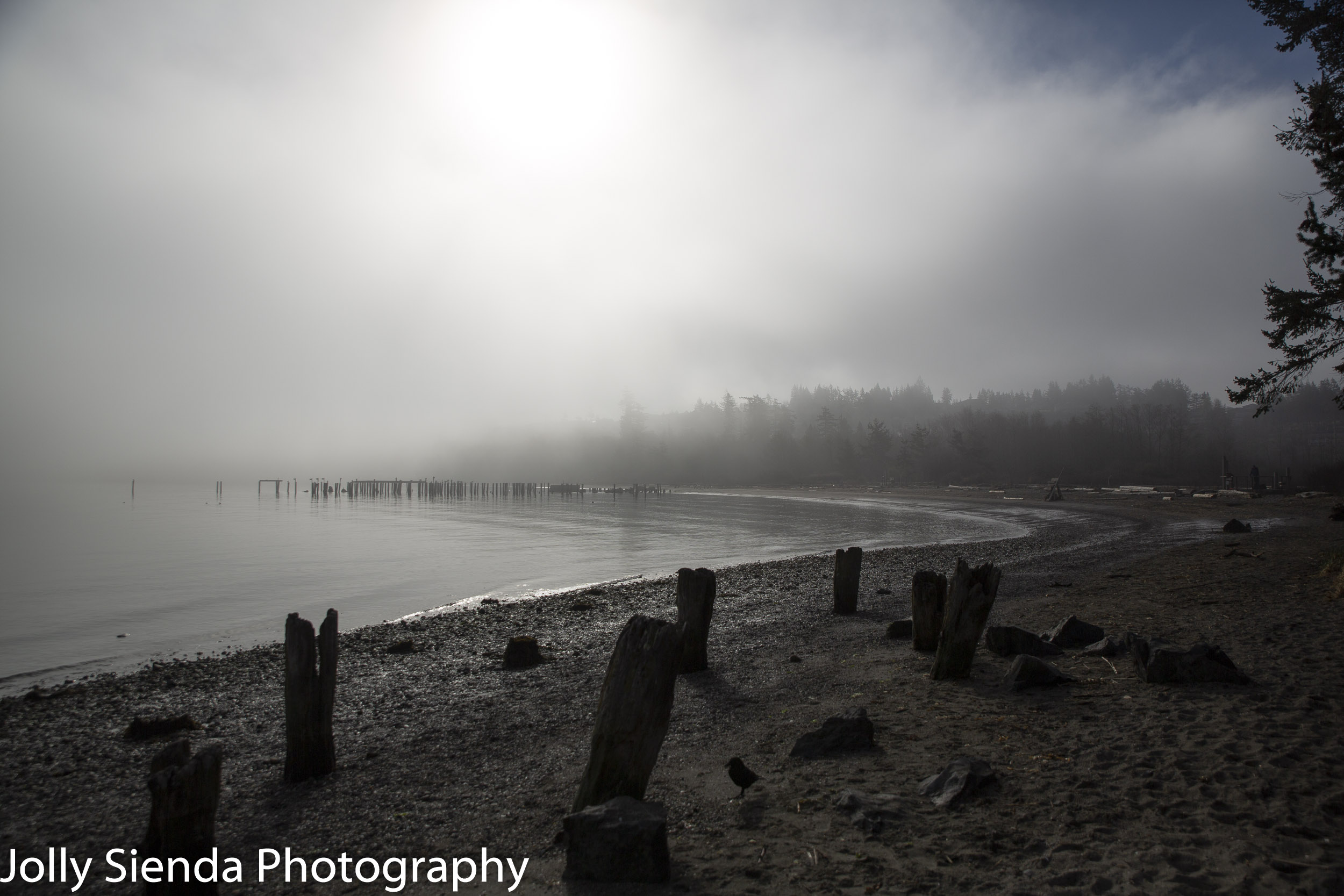 Crow and pilings at the foggy beach of Ship Harbor