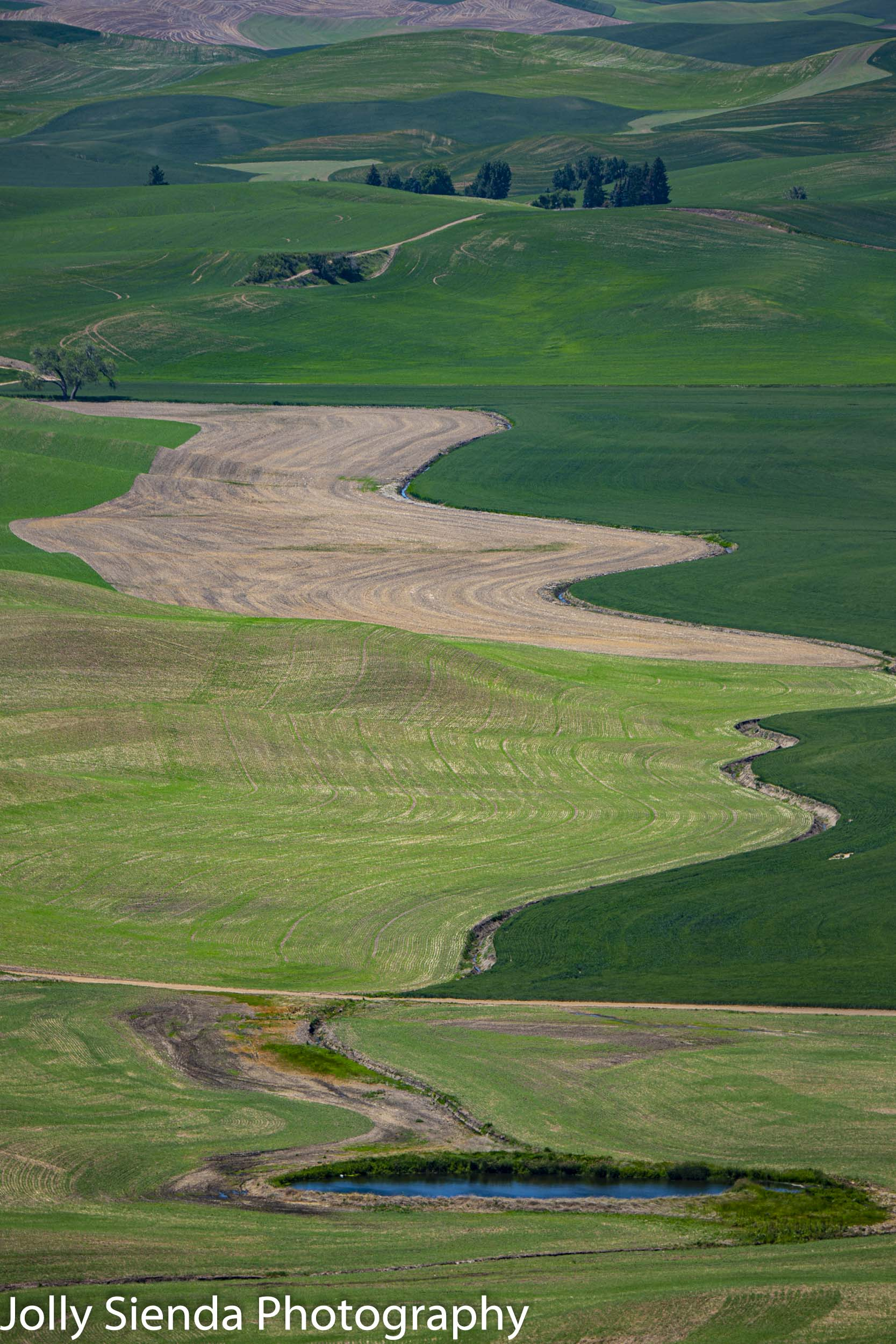 Curvy shades of green and trees dot the Palouse