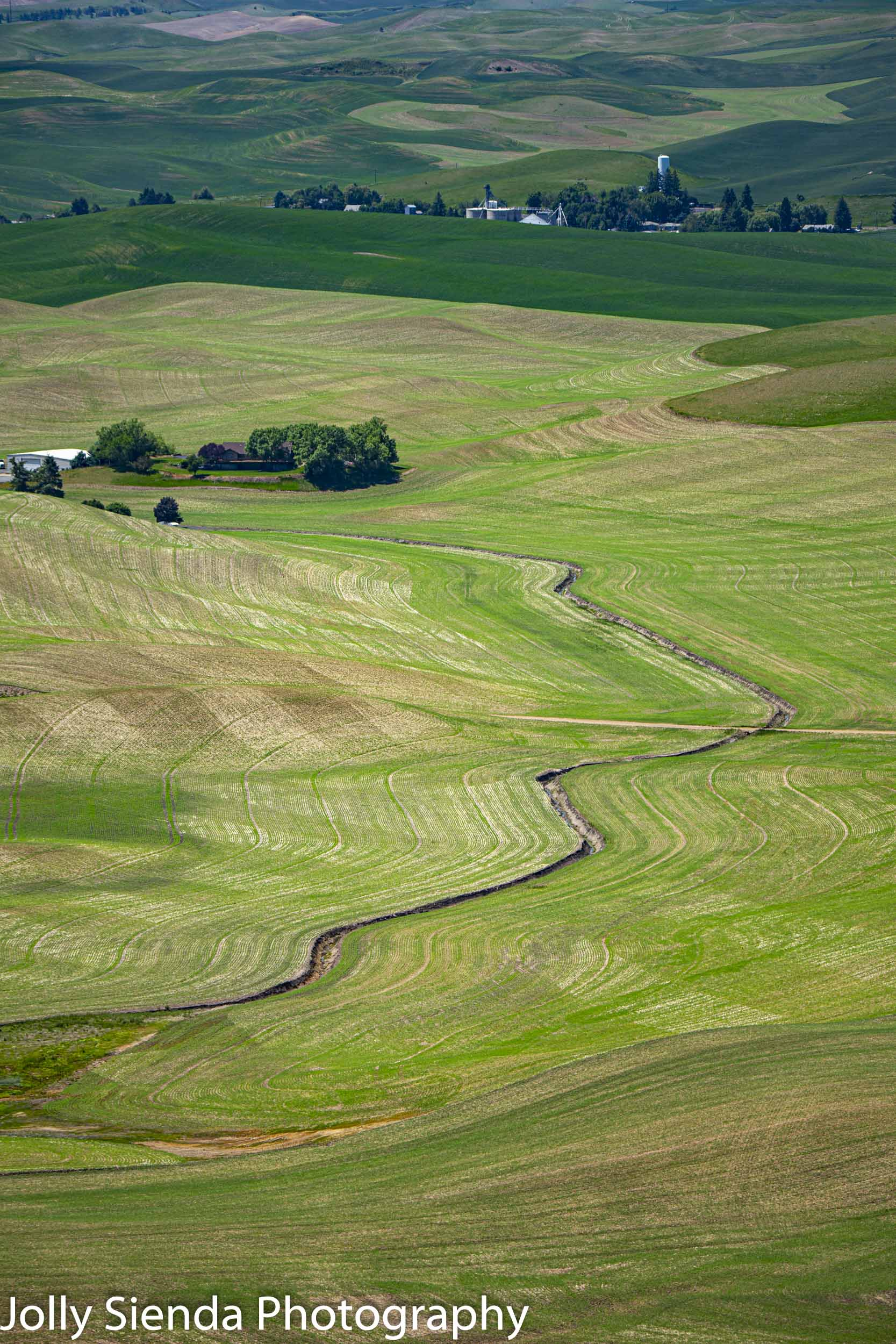 Palouse, curvy shades of green pastures