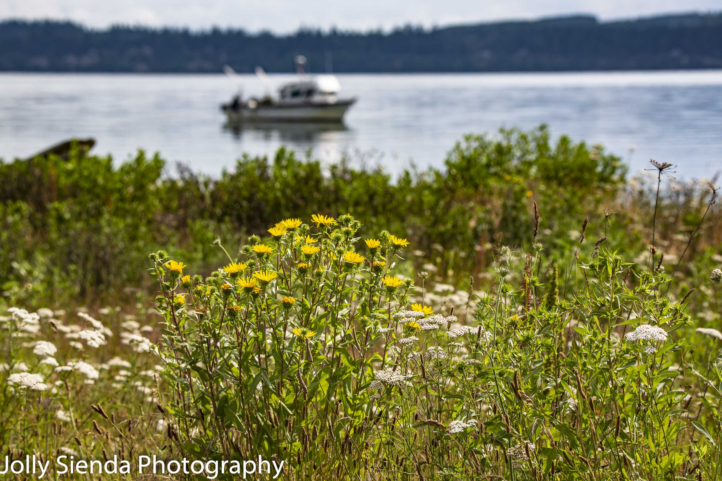 Seagrass and daisies and a fishing boat