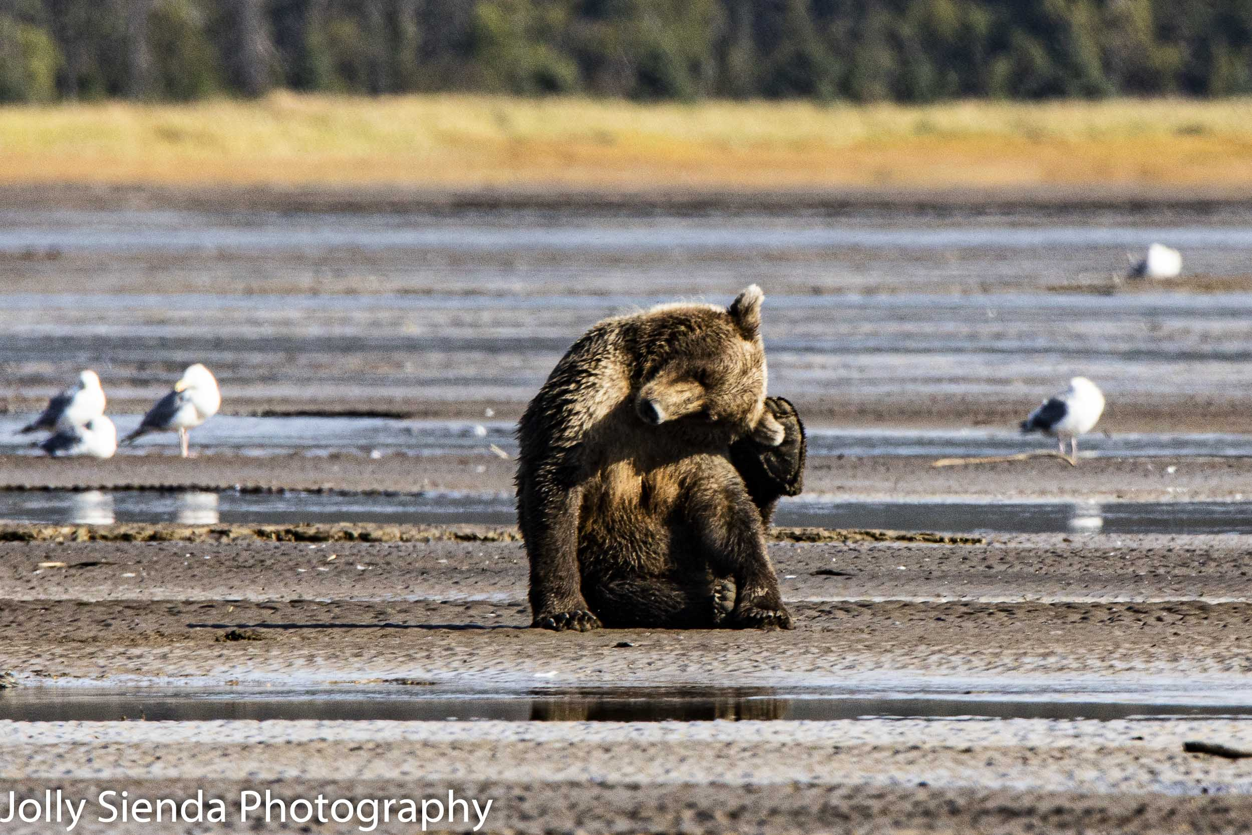 Bear yoga!