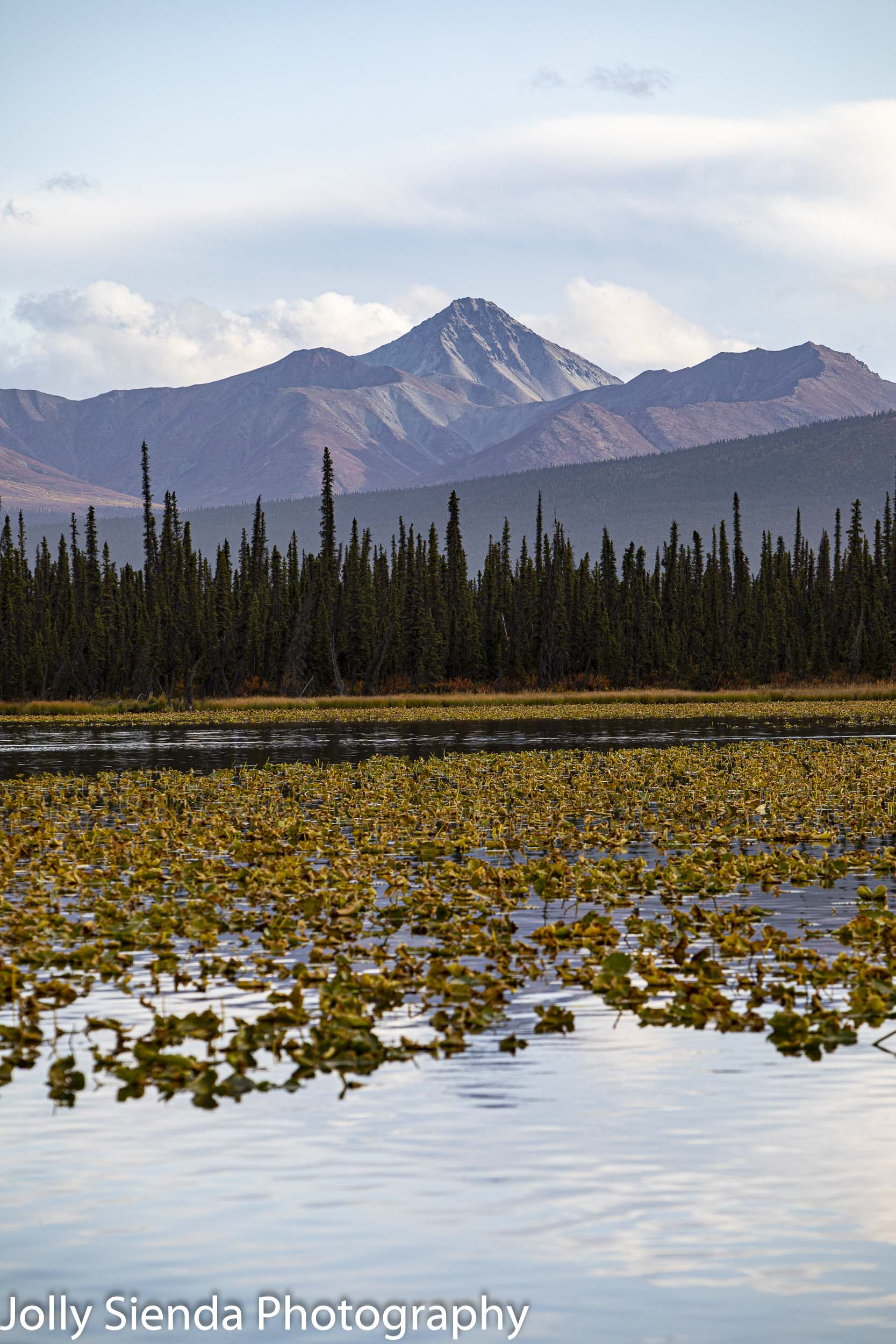 Wrangell Mountains, forest, and a autumn lily pond