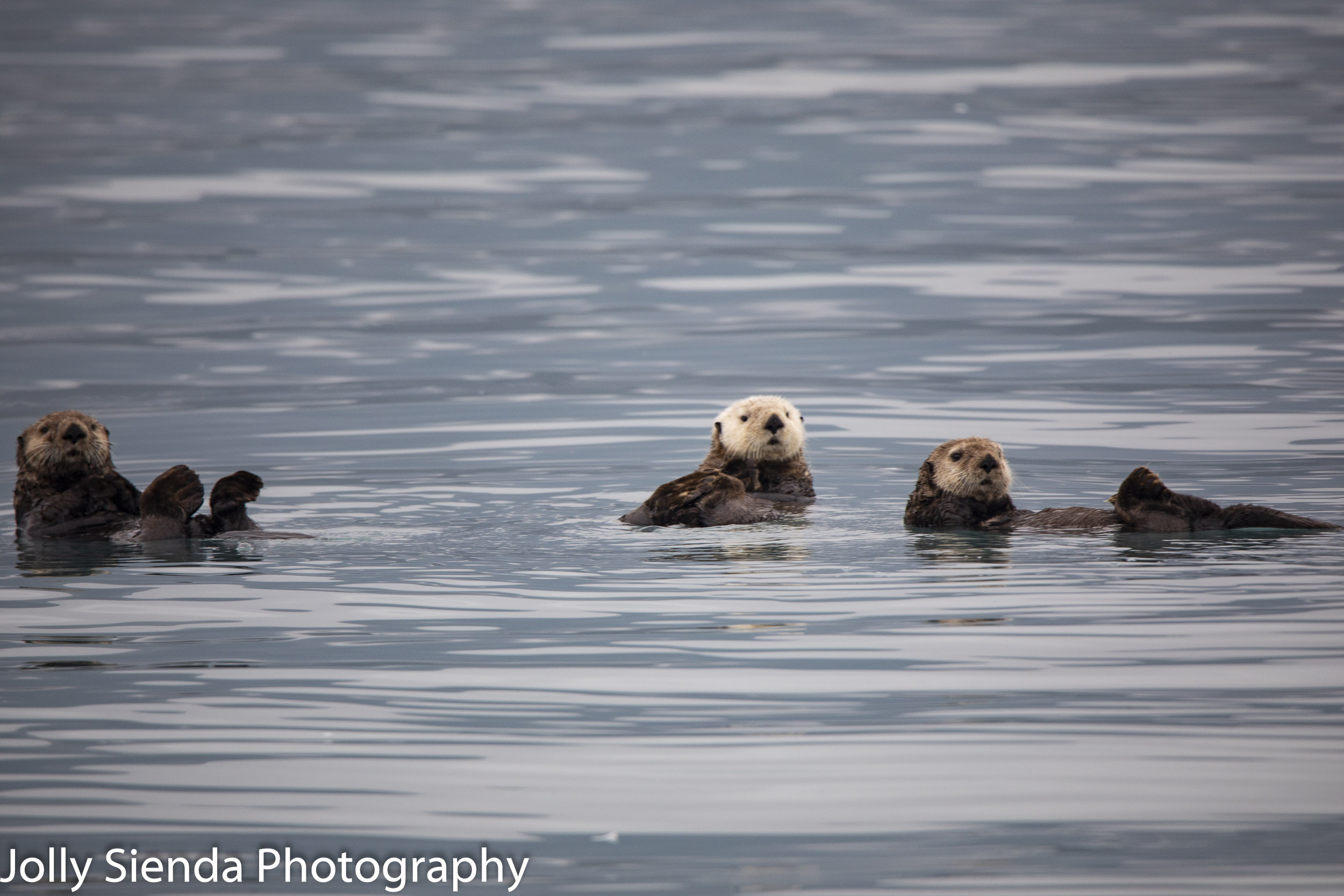 Sea Otters!