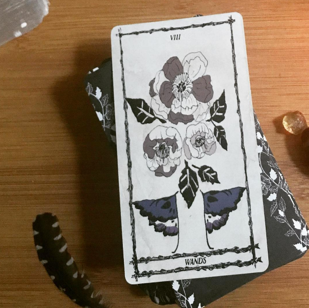 8 of Wands Daily Pull | Kelli Jenkins, @spellsisters on Instagram