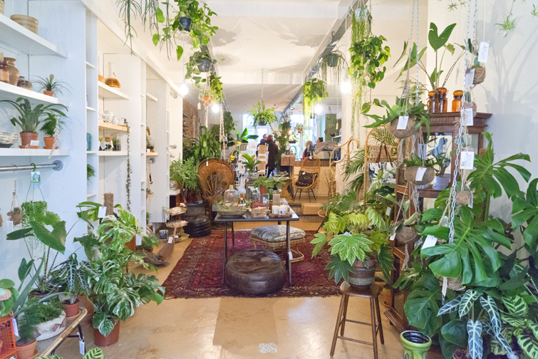 Joelix | Plant shop in The Netherlands