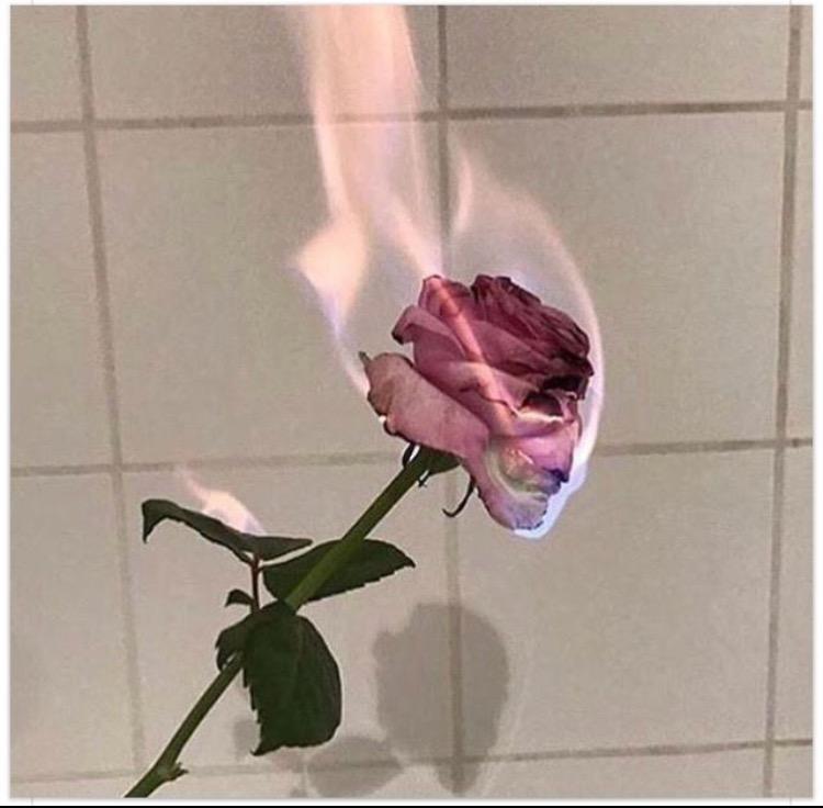flaming rose.jpg