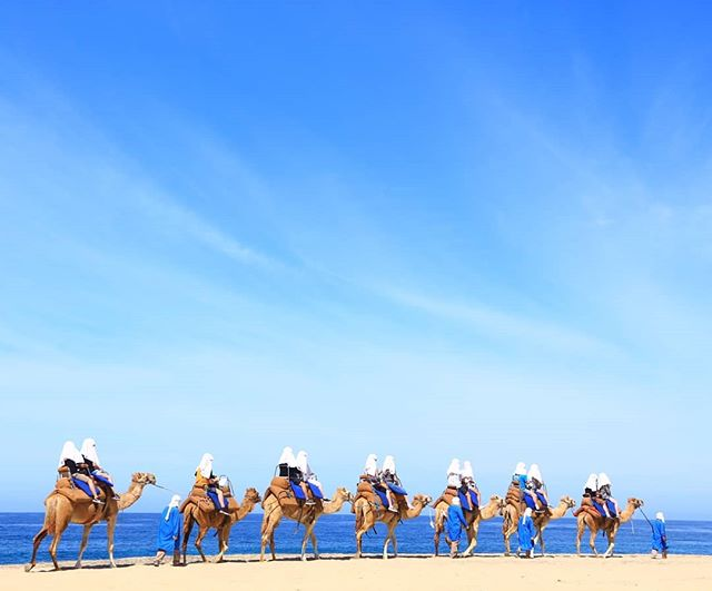 Uh oh, guess what day it is? 🐫 Our clients shared this awesome picture of their fun camel safari during their cruise stop at Cabo San Lucas. They spent a relaxing week on the @Carnival Splendor 🛳️ with stops in Cabo and Puerto Vallarta 🇲🇽#octravelagent #visitloscabos #visitmexico #happyclients #w2ntravel #where2next #humpday