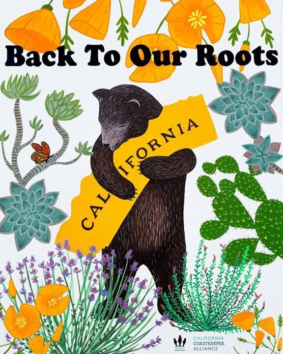 California Coastkeeper Alliance   A new California droughtmascot. Water wise bear wants you to embrace natives and plants that flourish in our natural arid habitat.