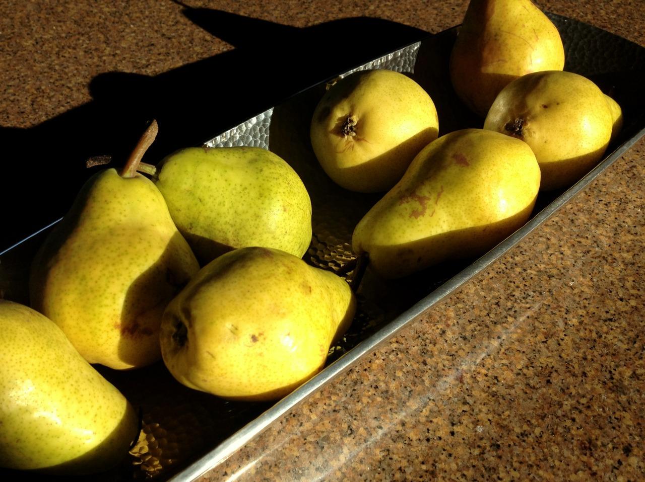 November 25, 2014    Bi-coastal moment…    Remembering when I grew Bartlett pears in my Massachusetts garden.
