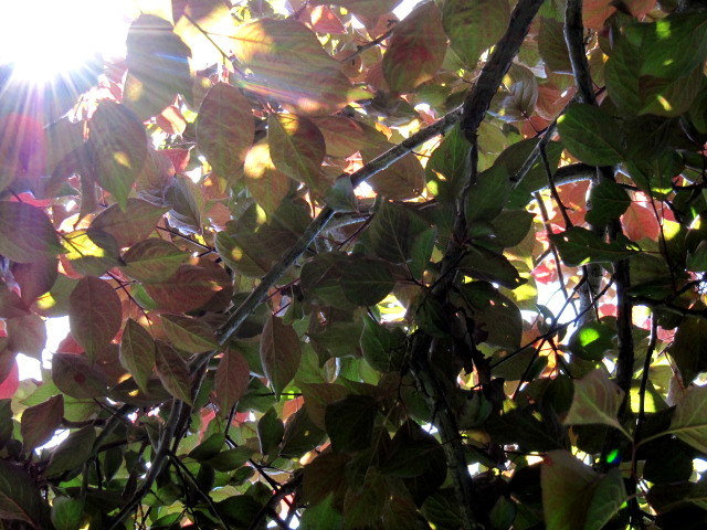 September 30, 2014                      Happily we bask in this warm September sun, Which illuminates all creatures.    —Henry David Thoreau