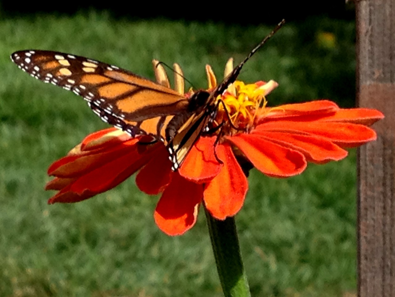 September 18, 2014    Leaves flutter by my kitchen window Or were they butterflies?    It's that season in southern California.