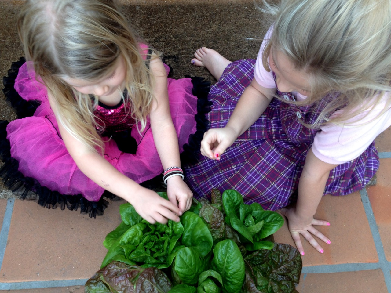March 26, 2014    My two little neighbors sampling my lettuce before choosing one of them for dinner.