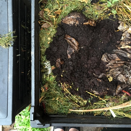 EG Compost with coffee grounds.JPG