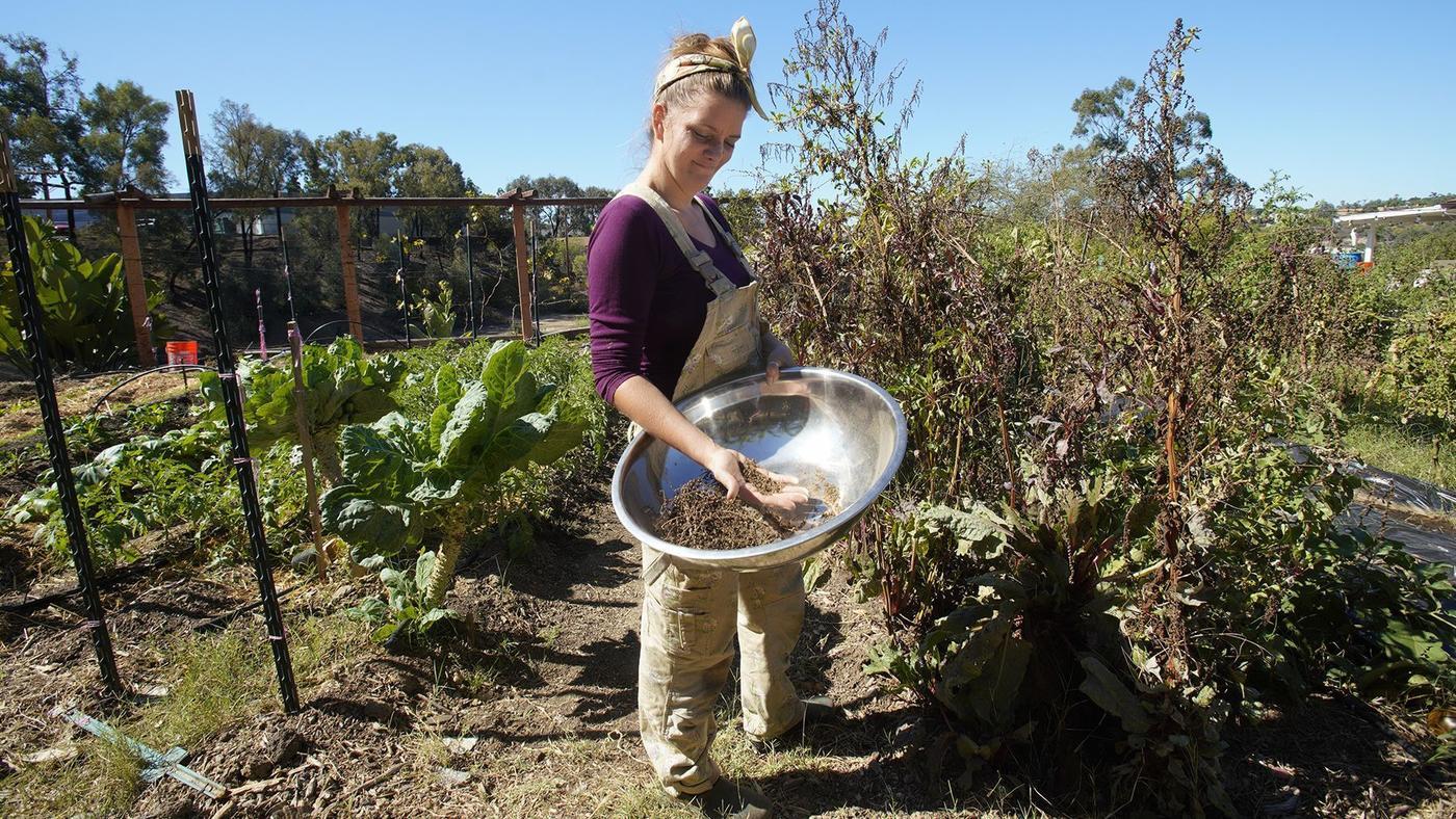 Brijette Peña collects seed from her certified organic garden. (Nelvin C. Cepeda / U-T)