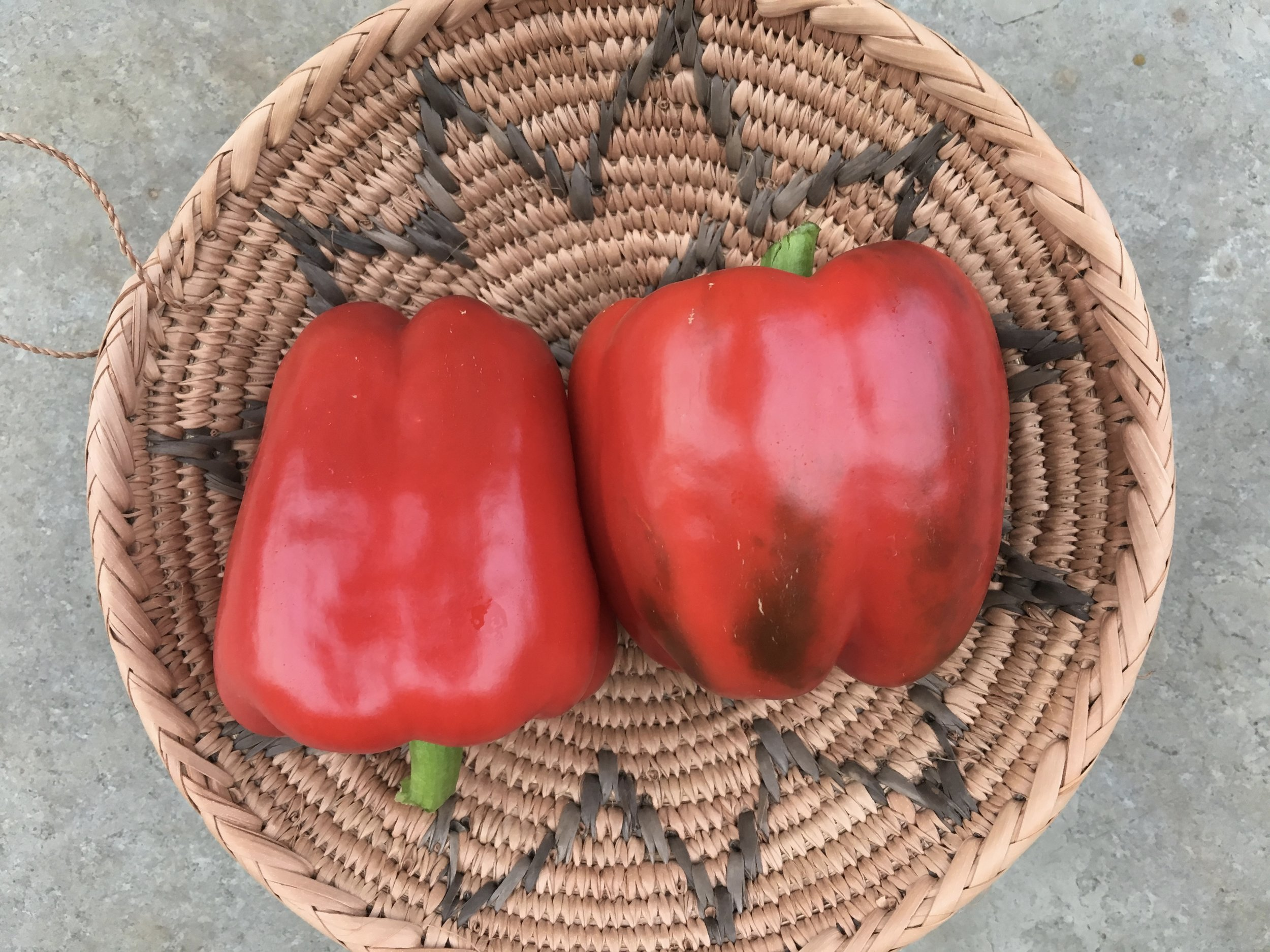 'Red Beauty' red peppers.