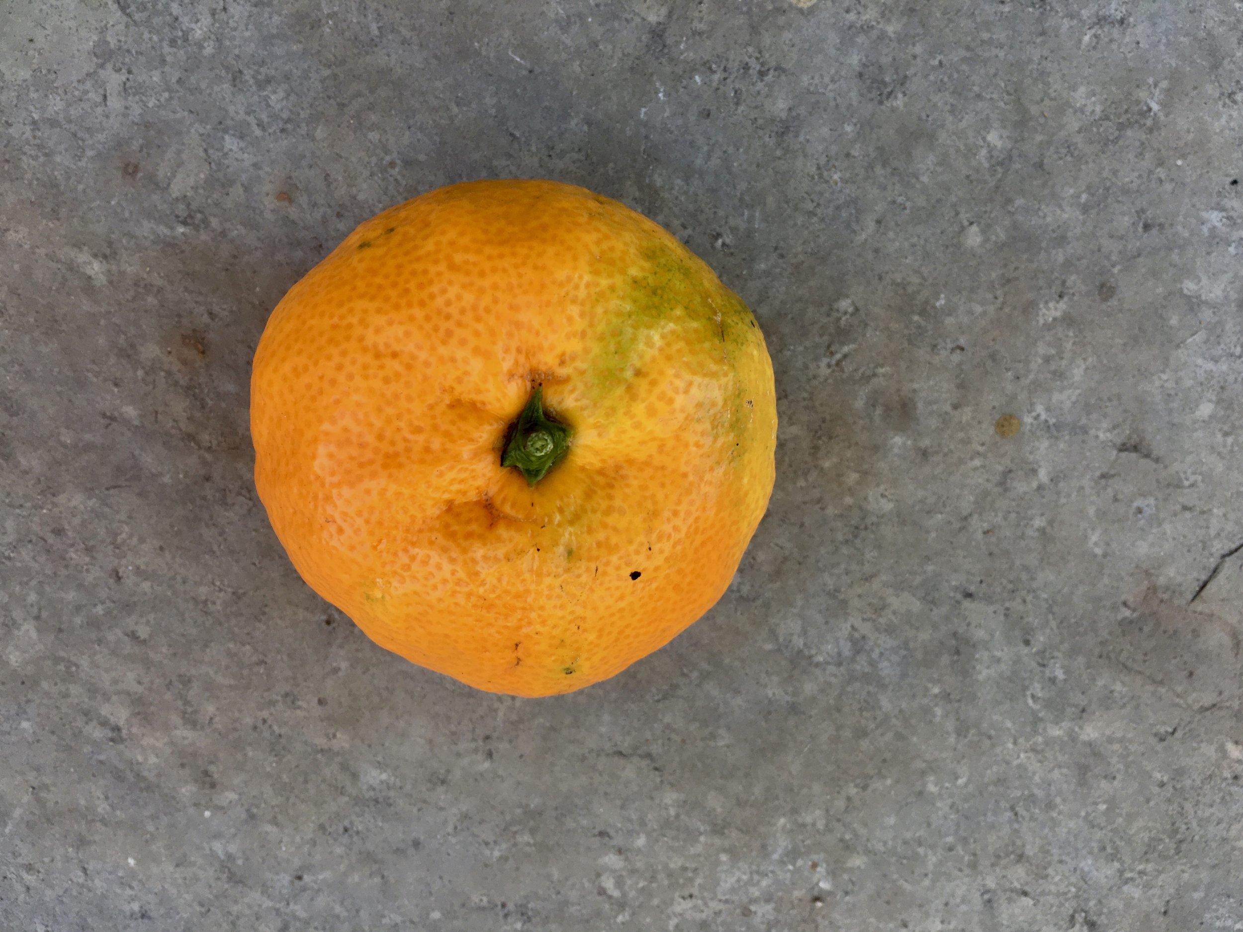 First tangerine of the season.