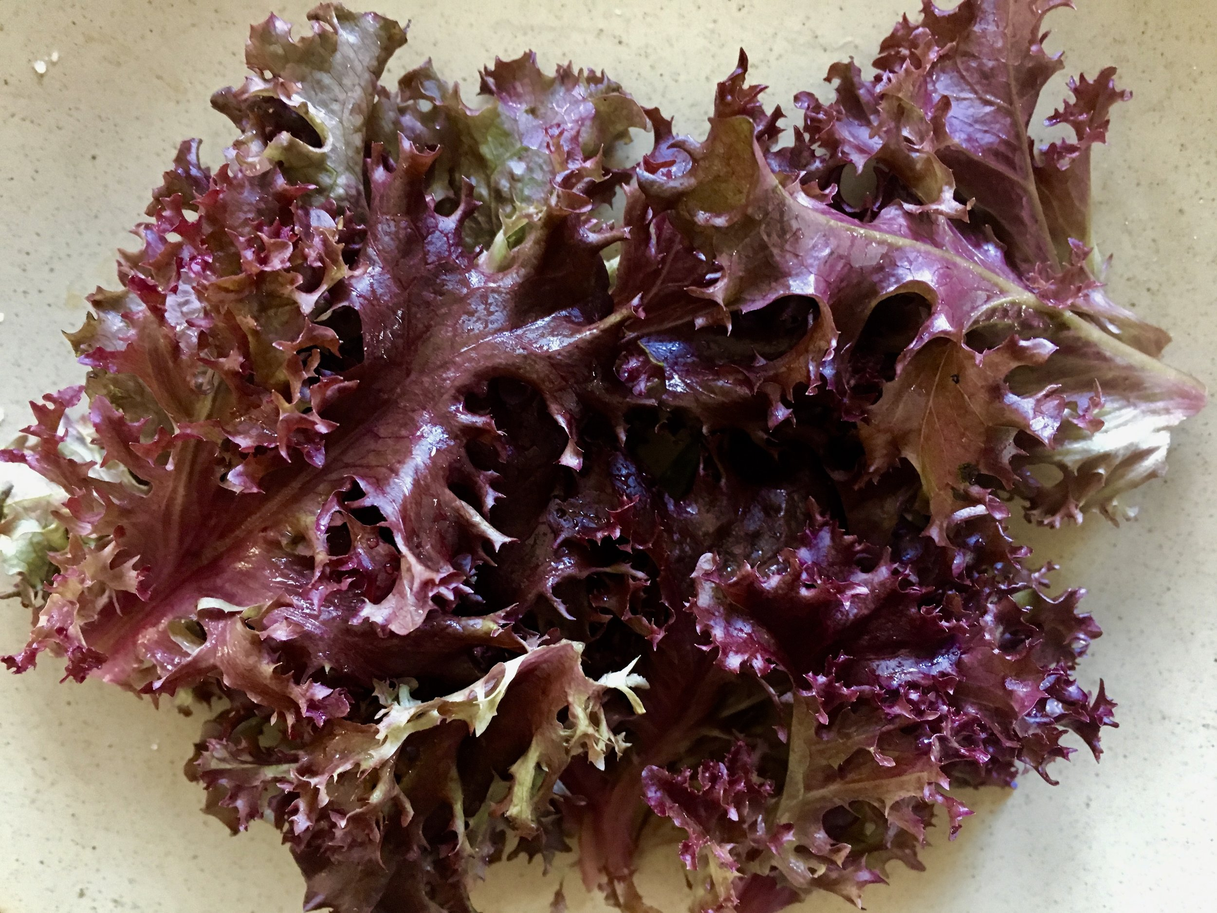Lolla rossa lettuce
