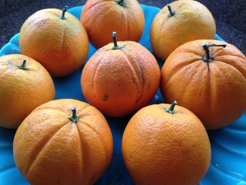 'Washington' navel oranges.