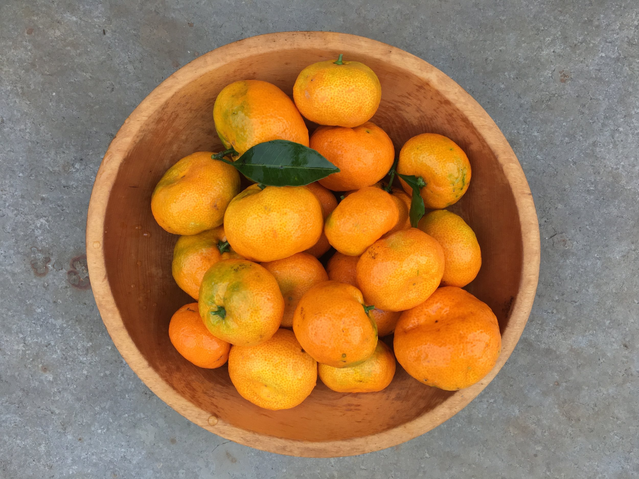 'Satsuma' tangerines