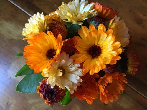 Seed-grown calendulas, 'Flashback' from Renee's Garden